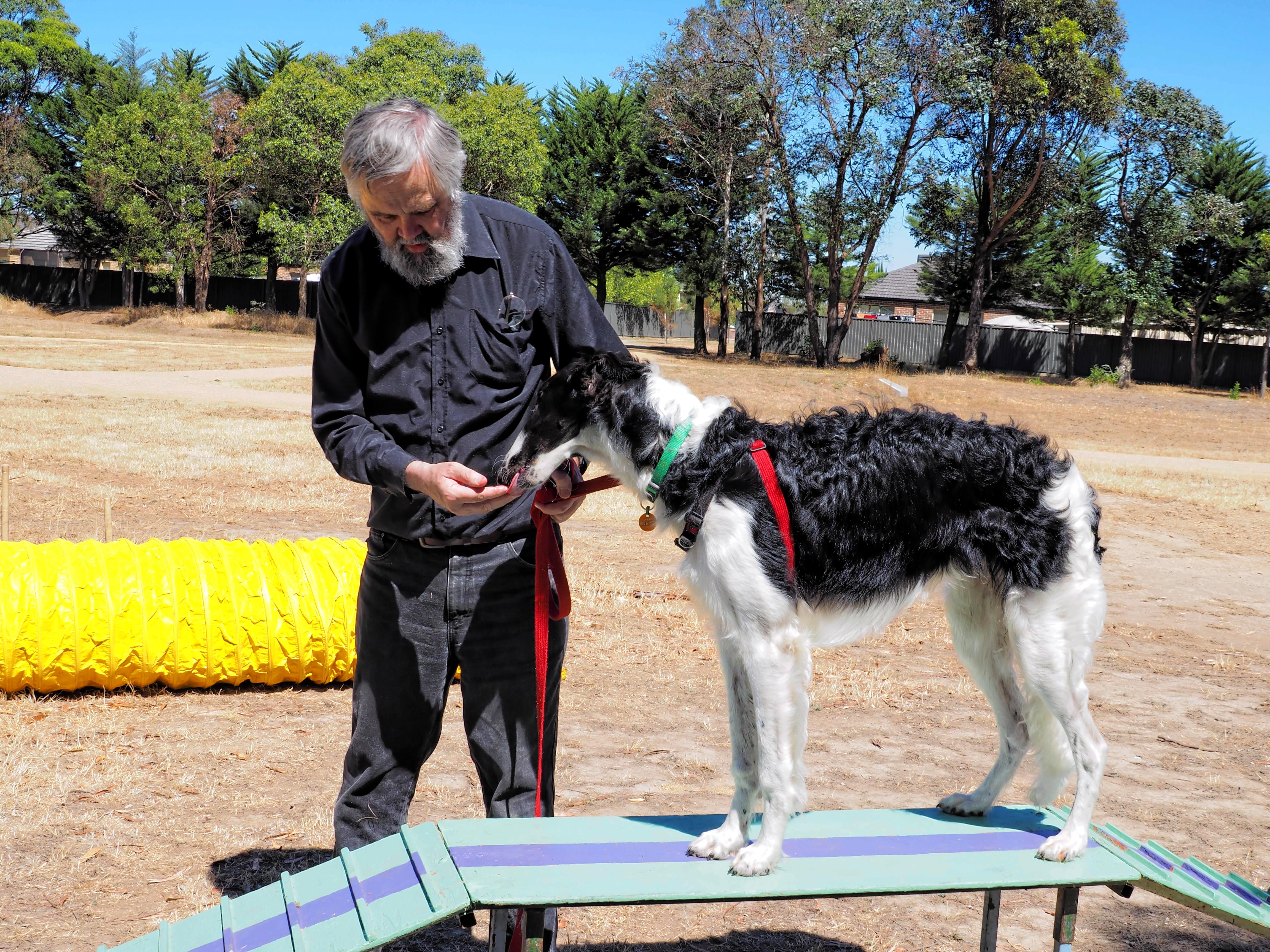 Dog-training-19.jpeg