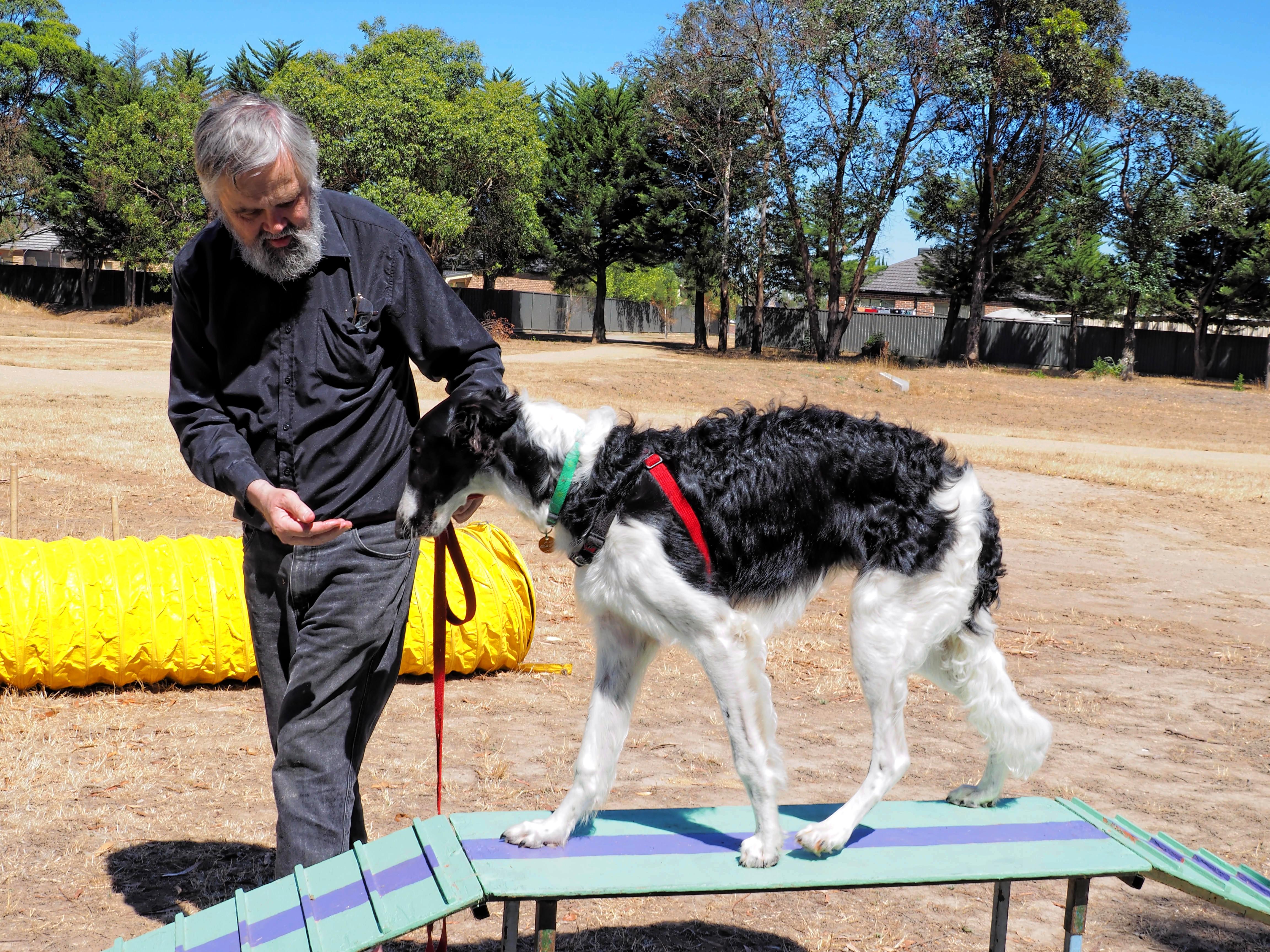 Dog-training-20.jpeg