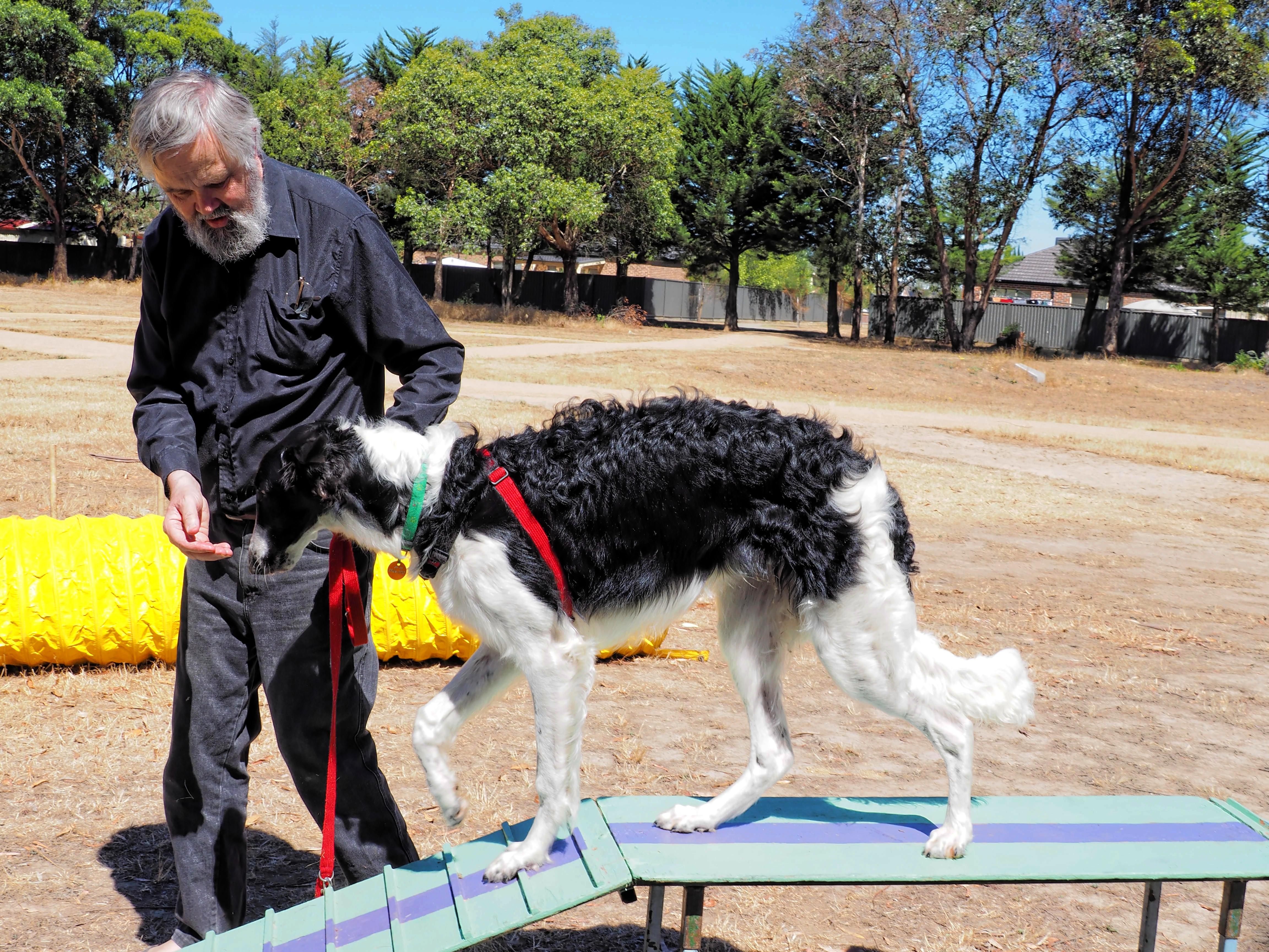 Dog-training-21.jpeg