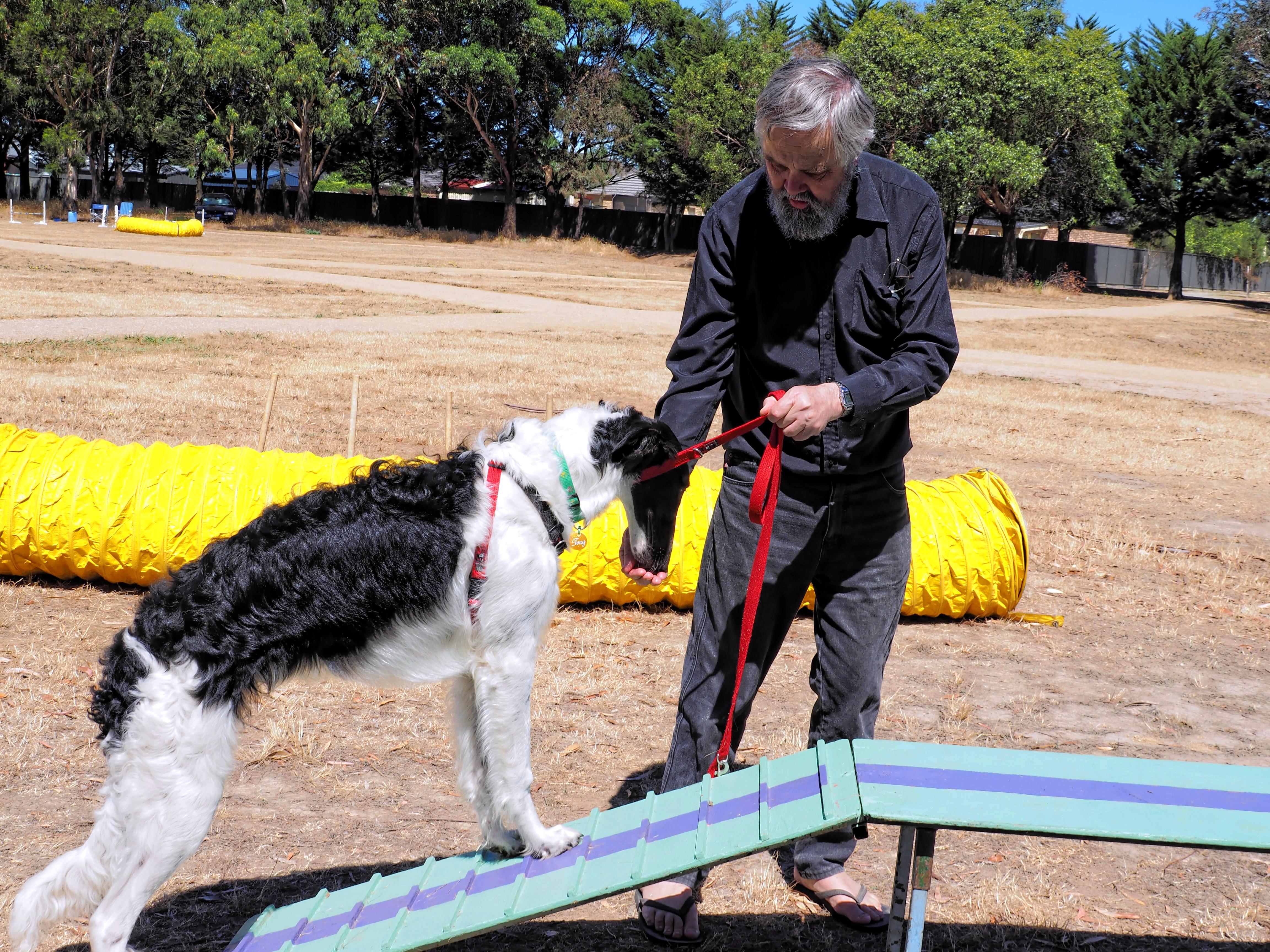 Dog-training-25.jpeg