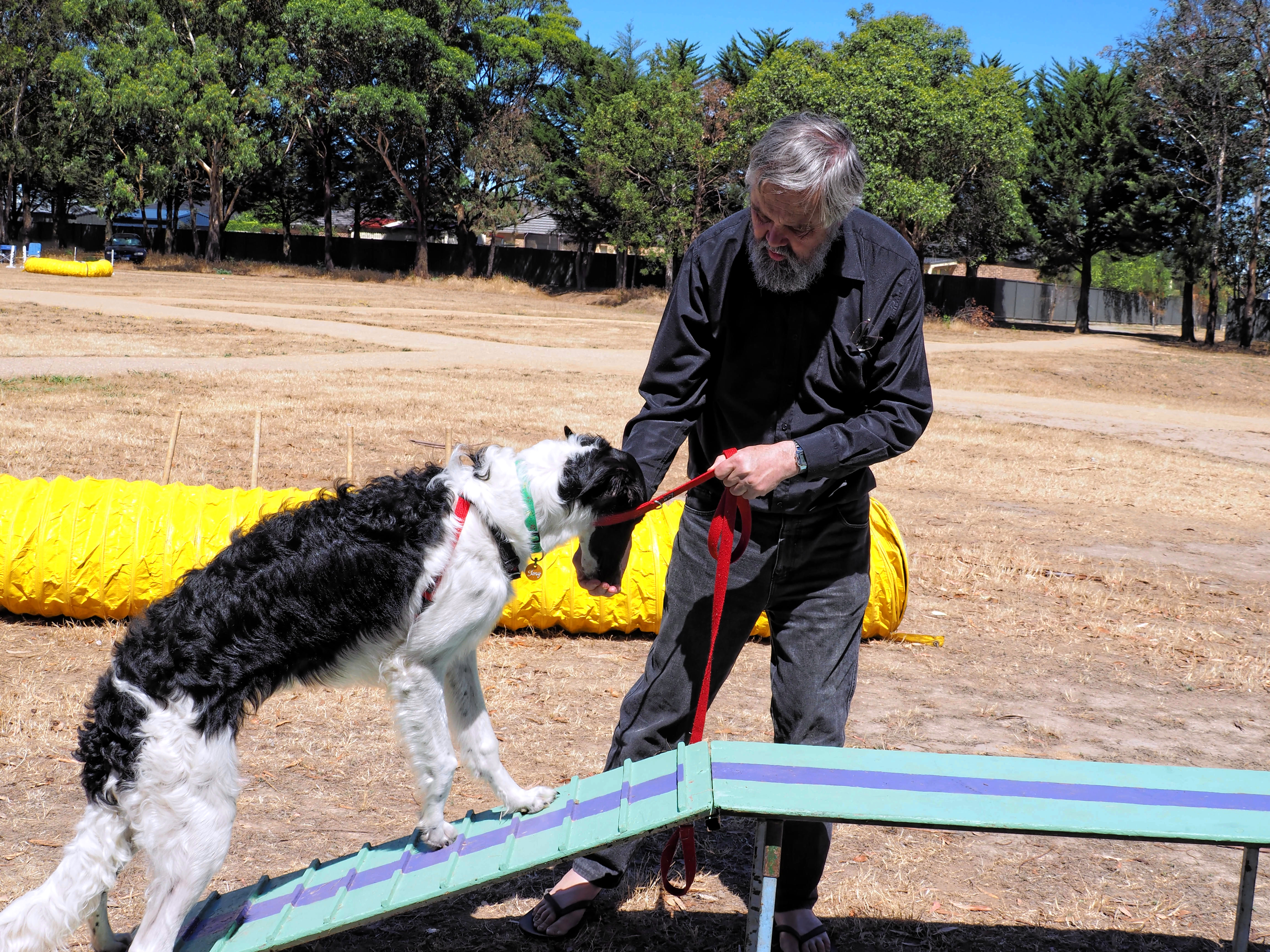 Dog-training-27.jpeg