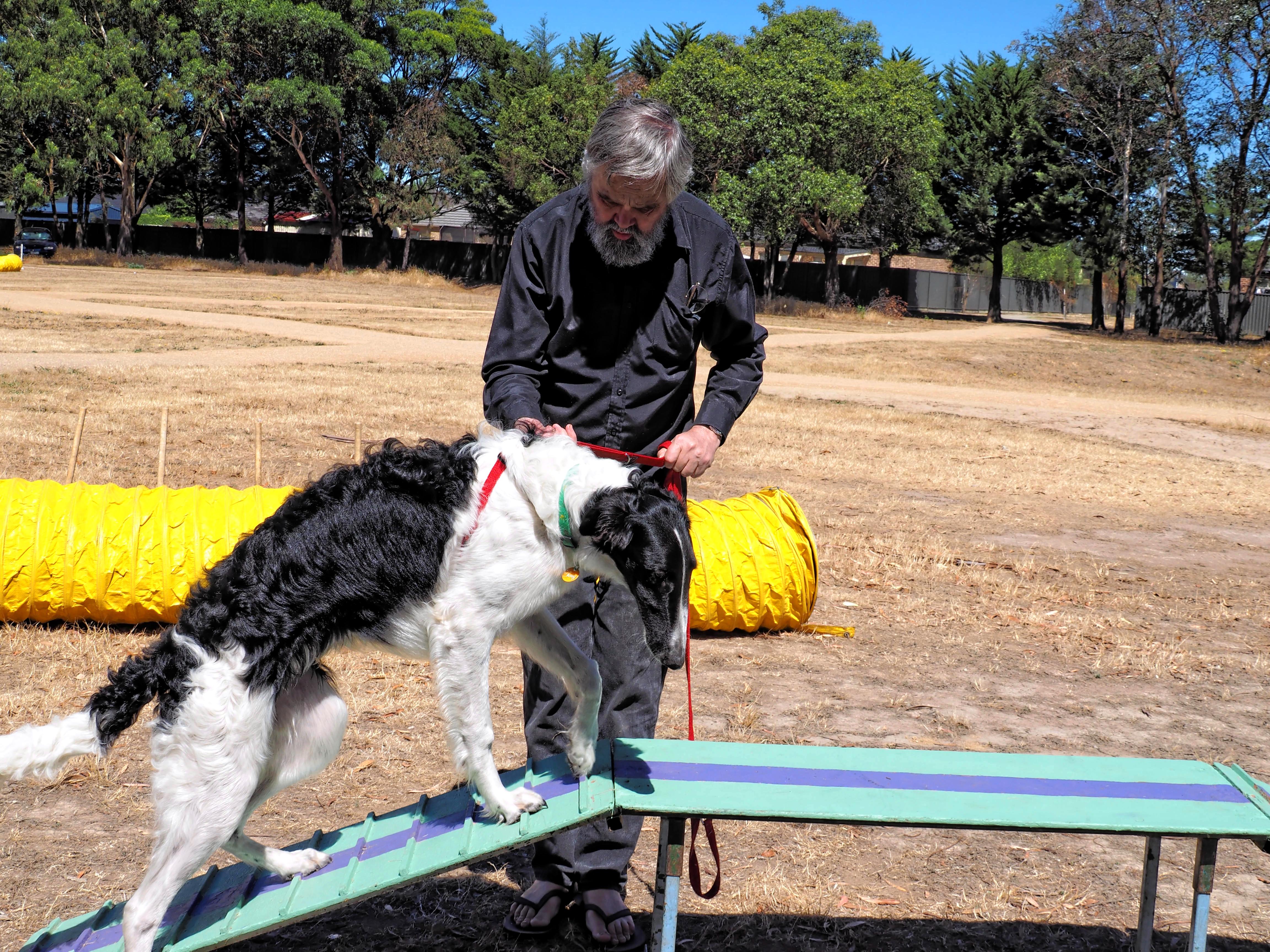 Dog-training-28.jpeg