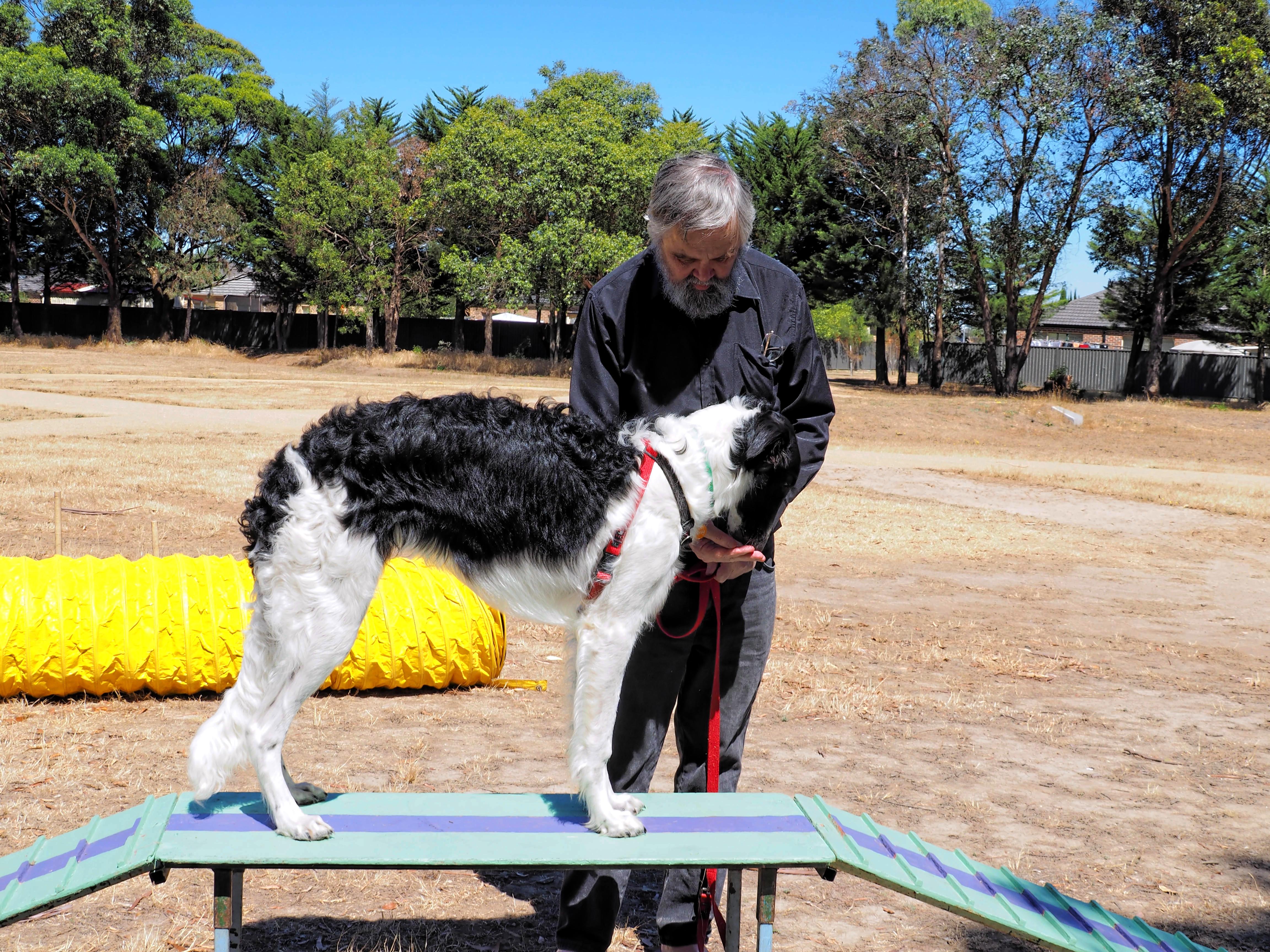 Dog-training-33.jpeg