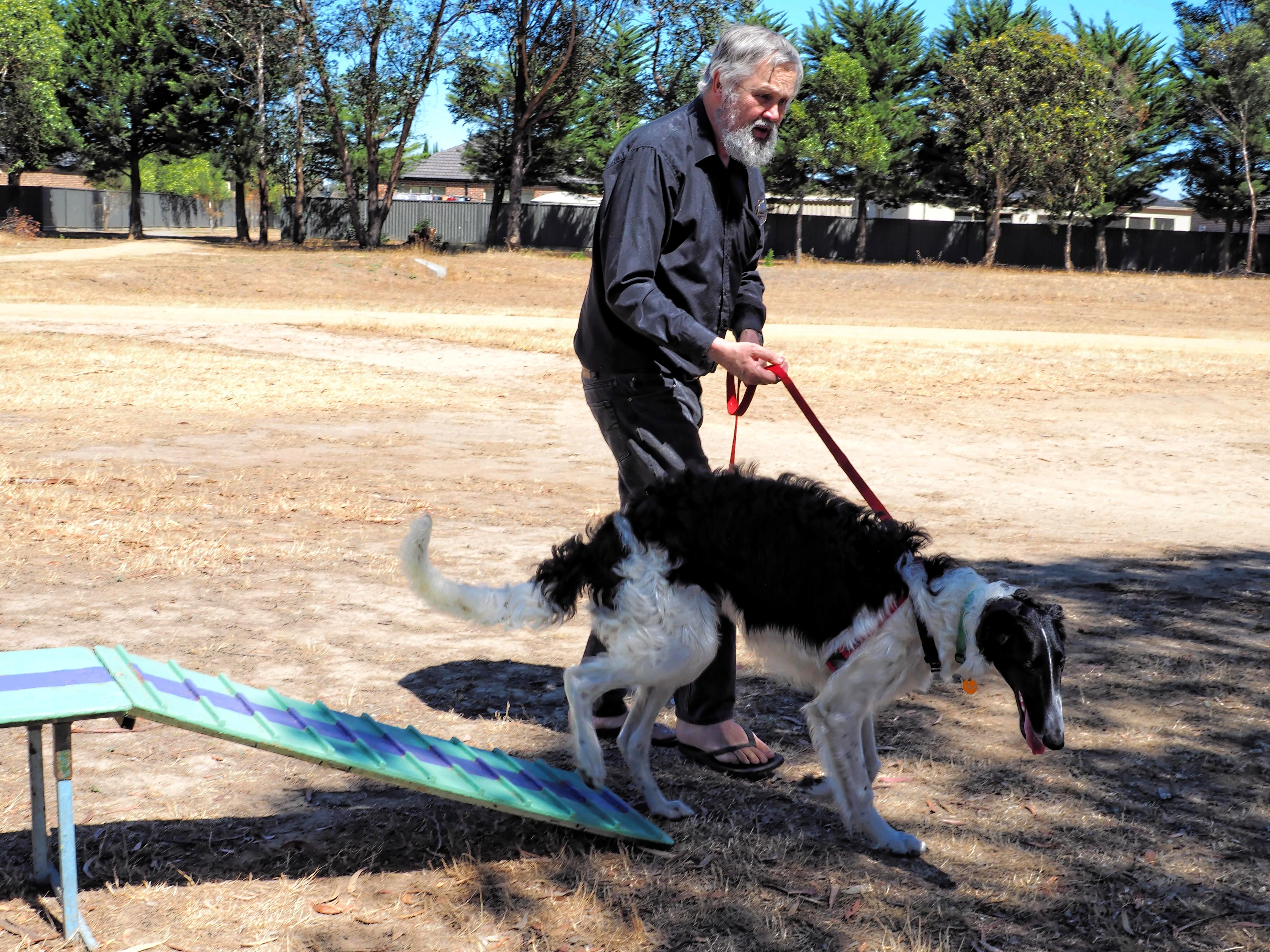 Dog-training-36.jpeg