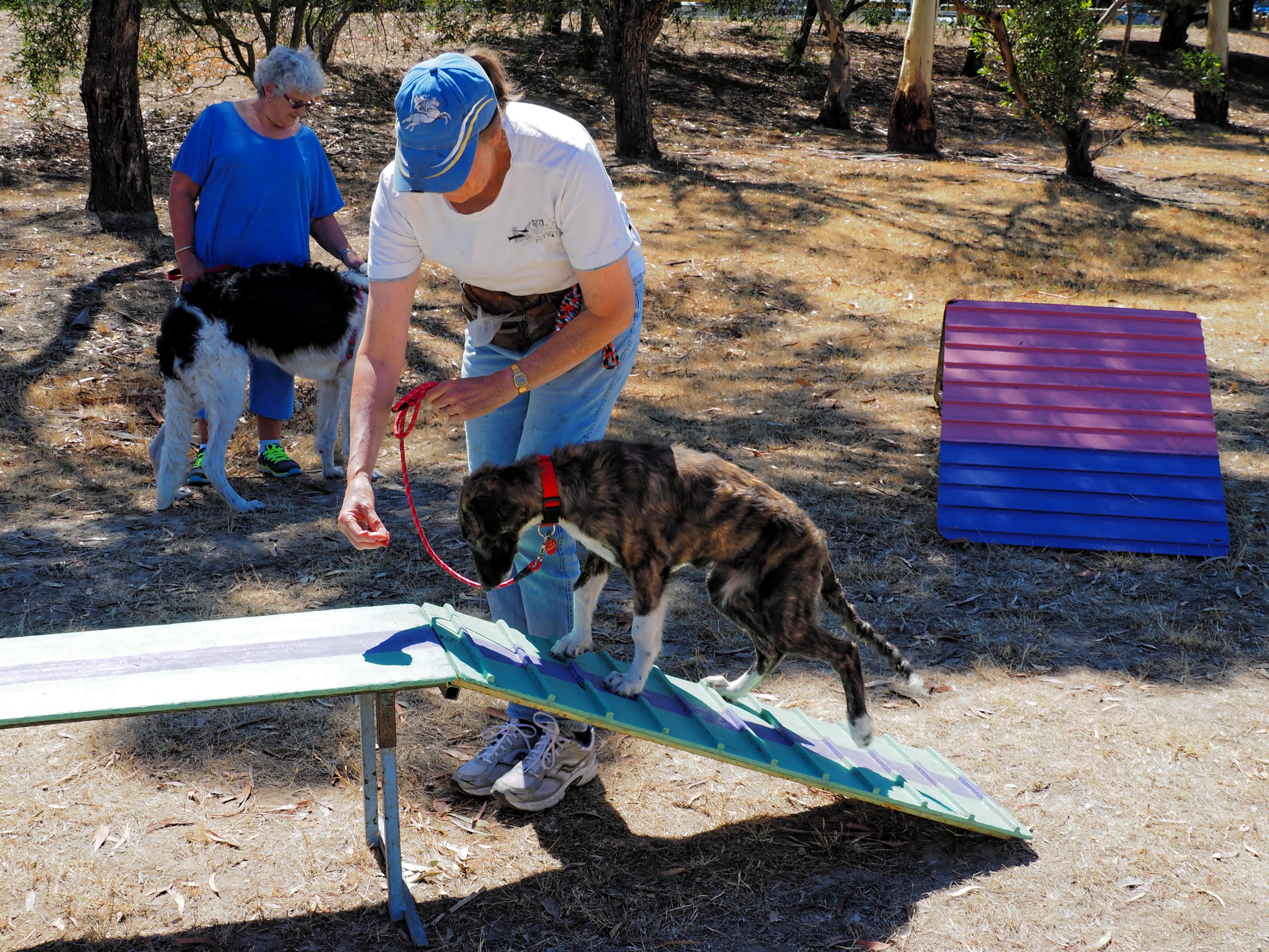 Dog-training-42.jpeg