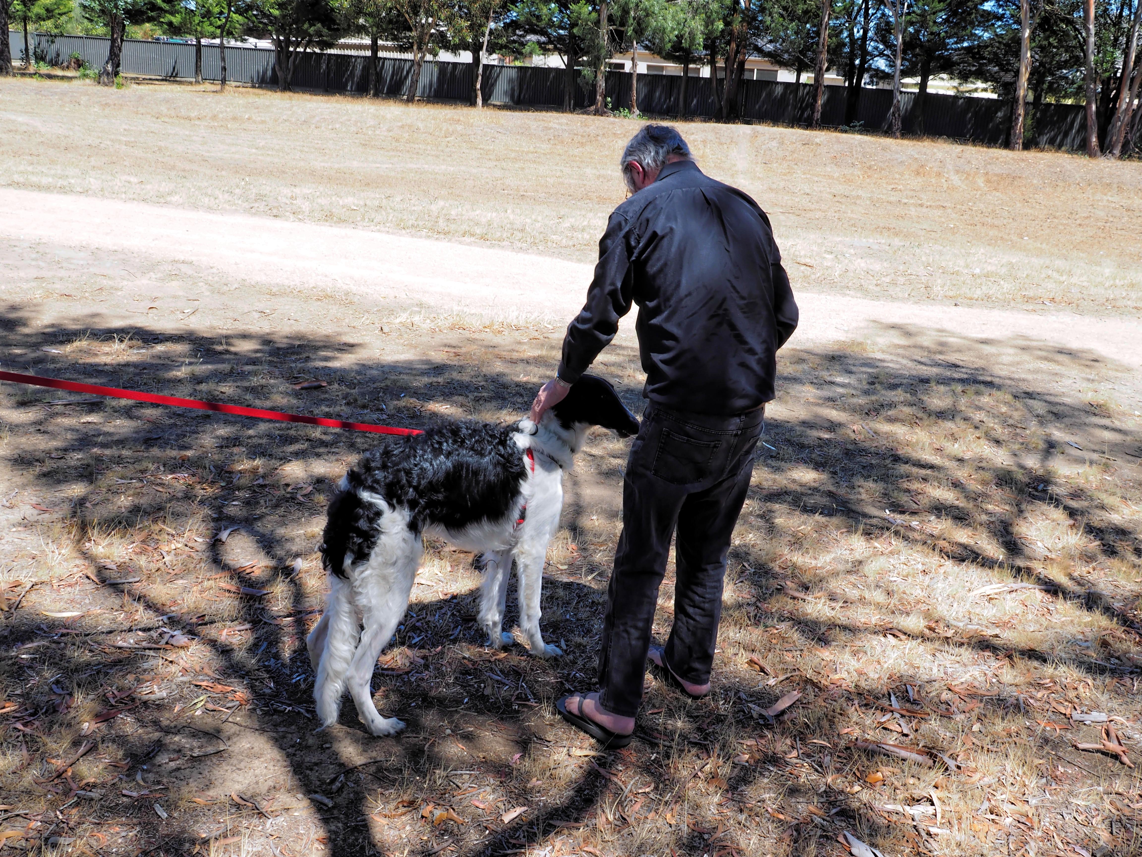 Dog-training-53.jpeg