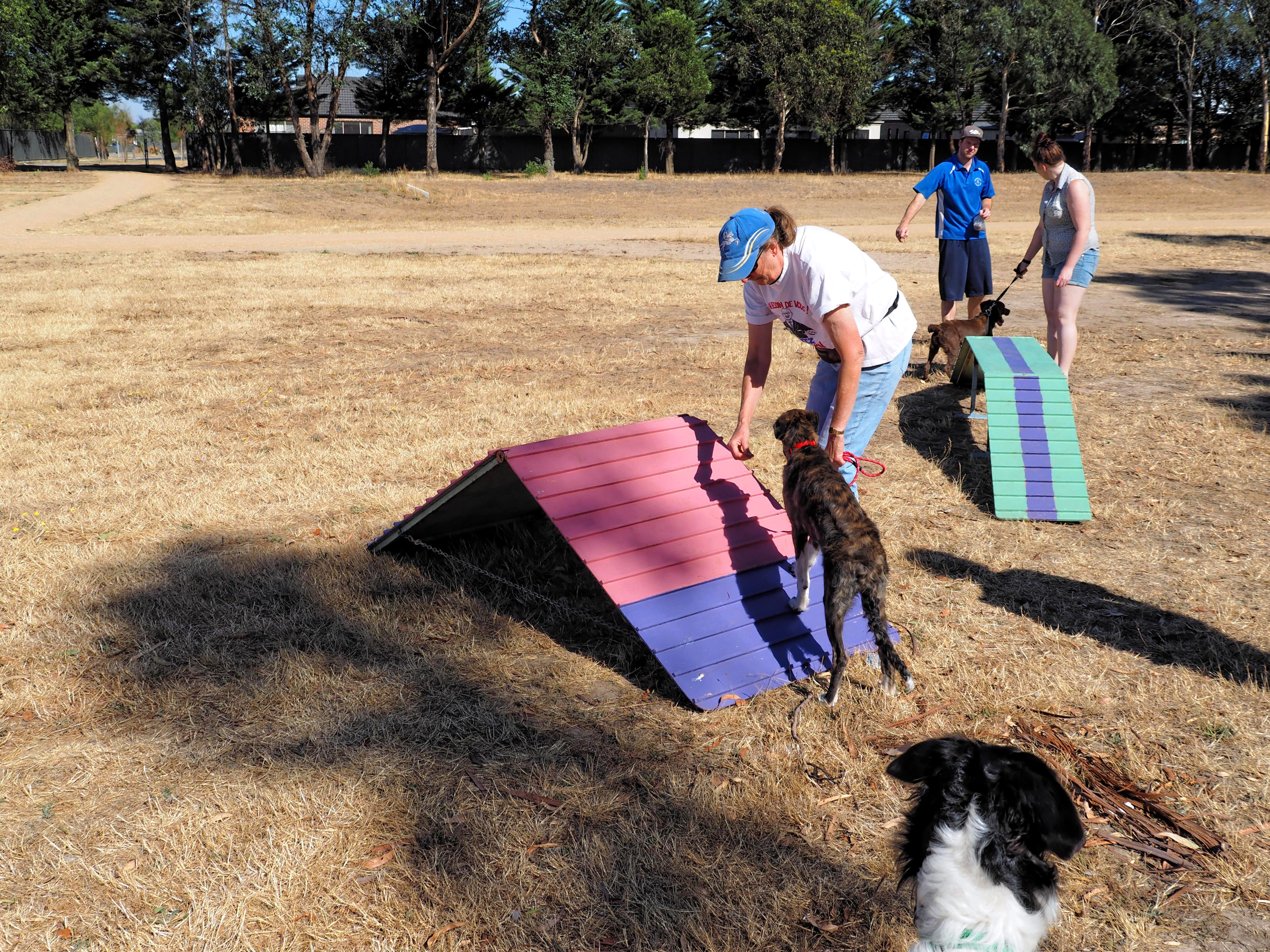 Dog-training-1.jpeg