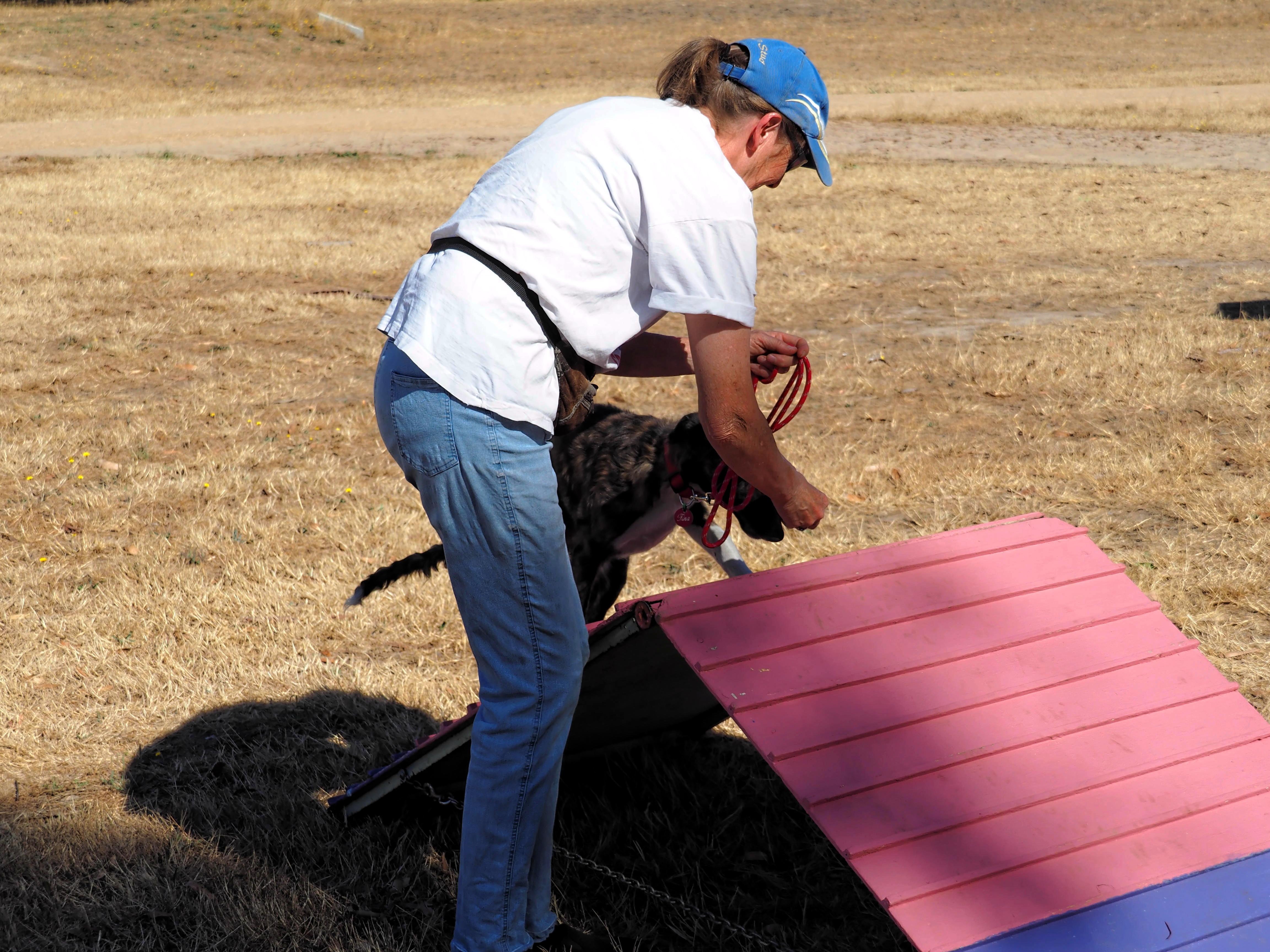 Dog-training-5.jpeg