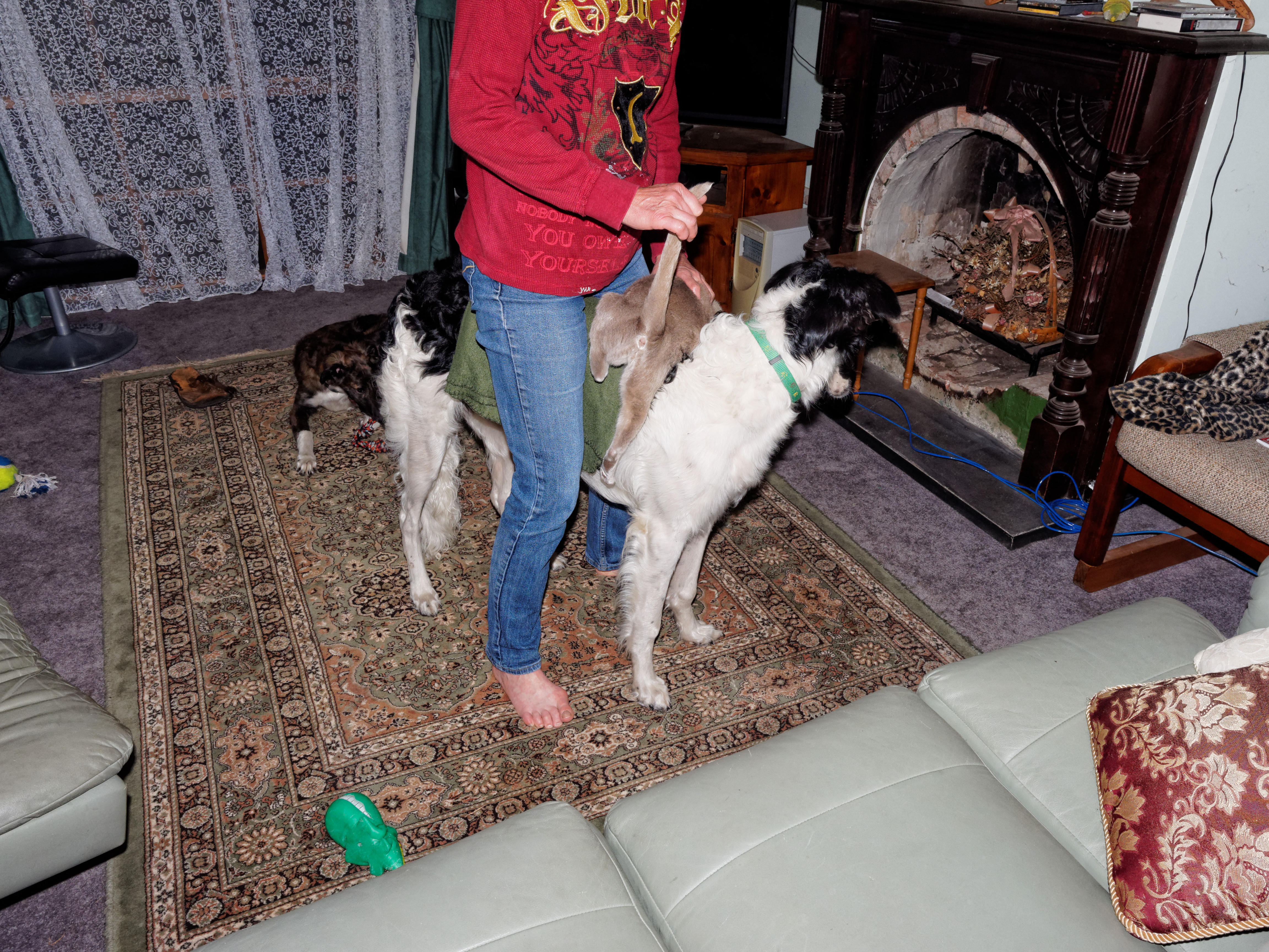 Chris-and-dogs-20-DxO.jpeg