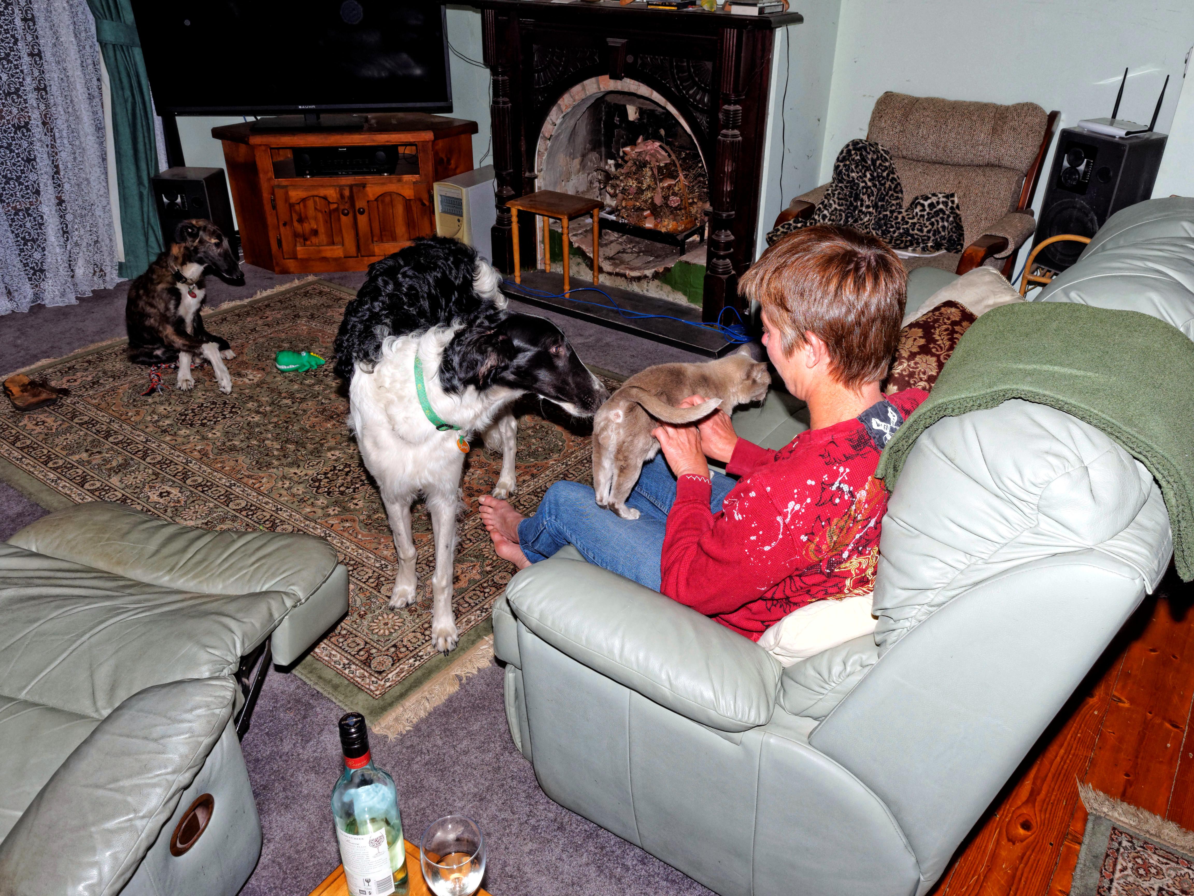 Chris-and-dogs-24.jpeg