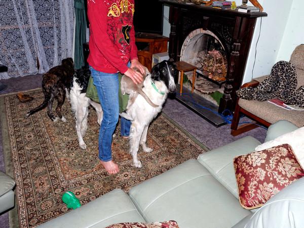 Chris-and-dogs-19.jpeg