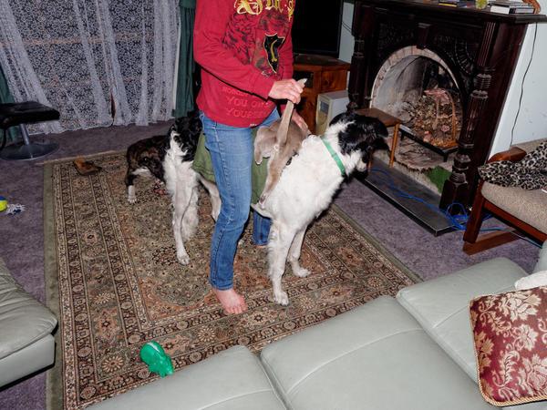 Chris-and-dogs-20-DxO.jpeg