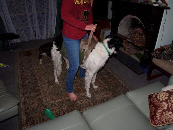 Chris-and-dogs-20-orig.jpeg