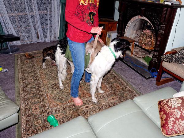 Chris-and-dogs-20.jpeg