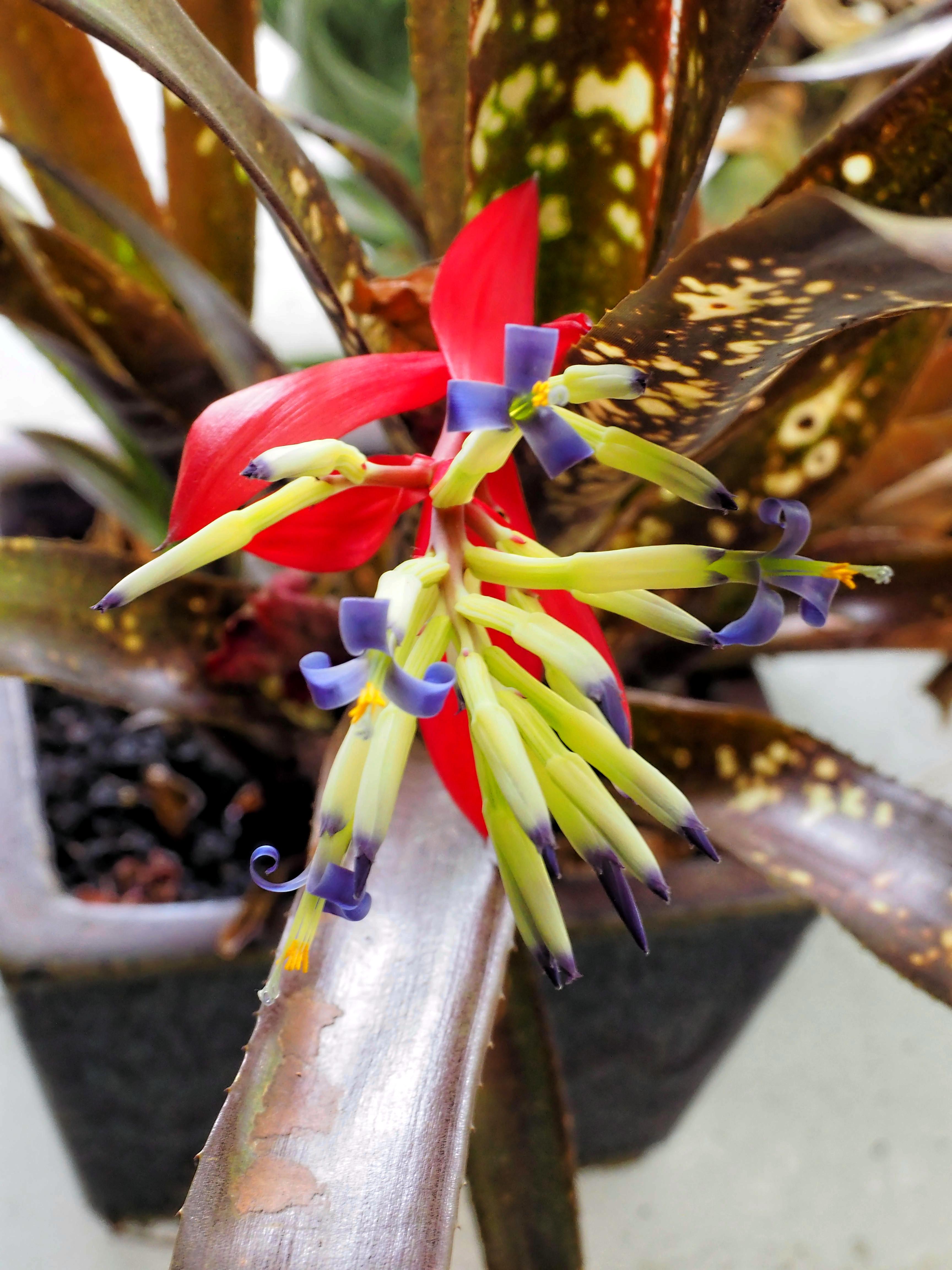 Bromeliad-2.jpeg