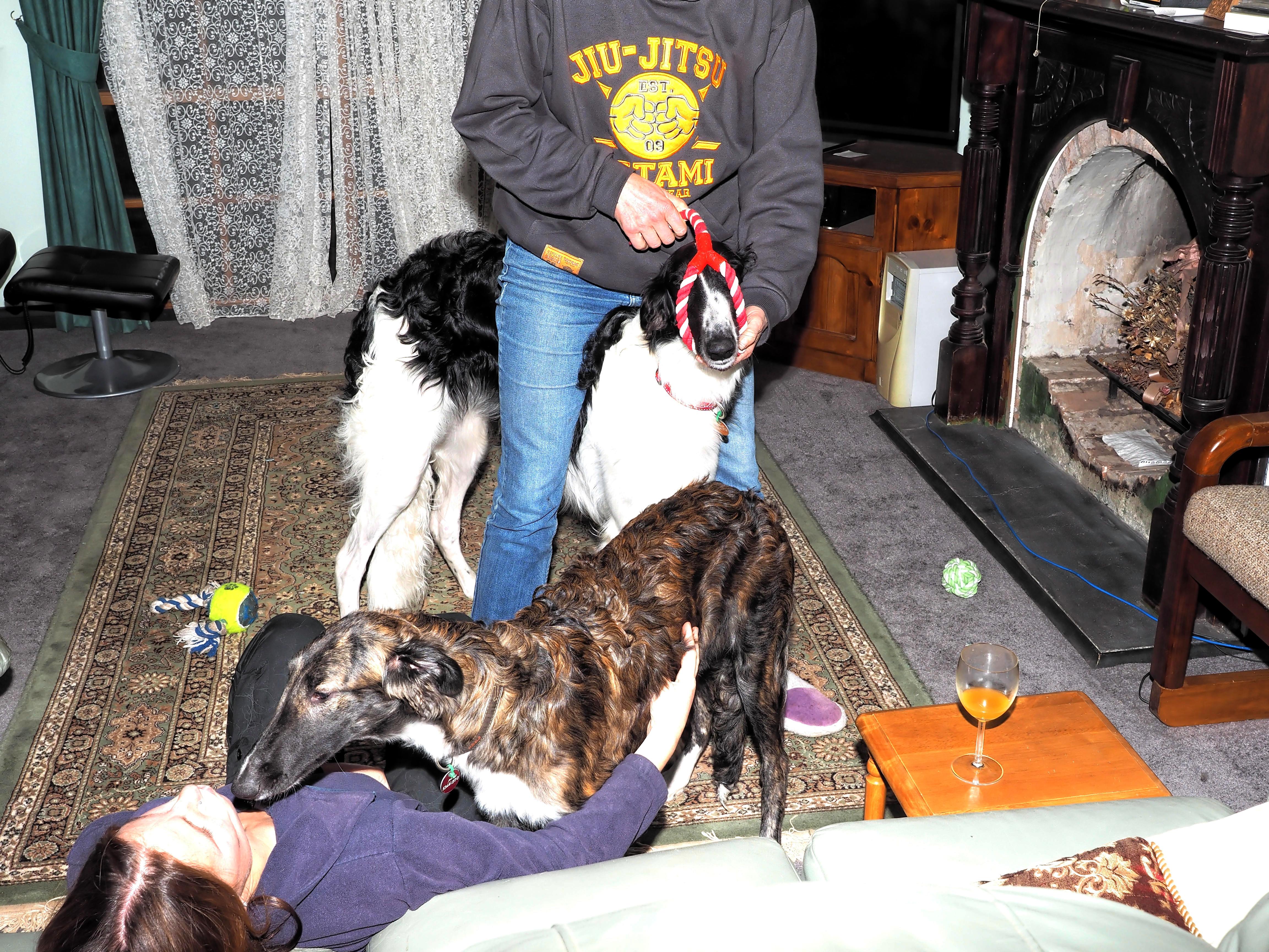 Fun-with-dogs-1.jpeg