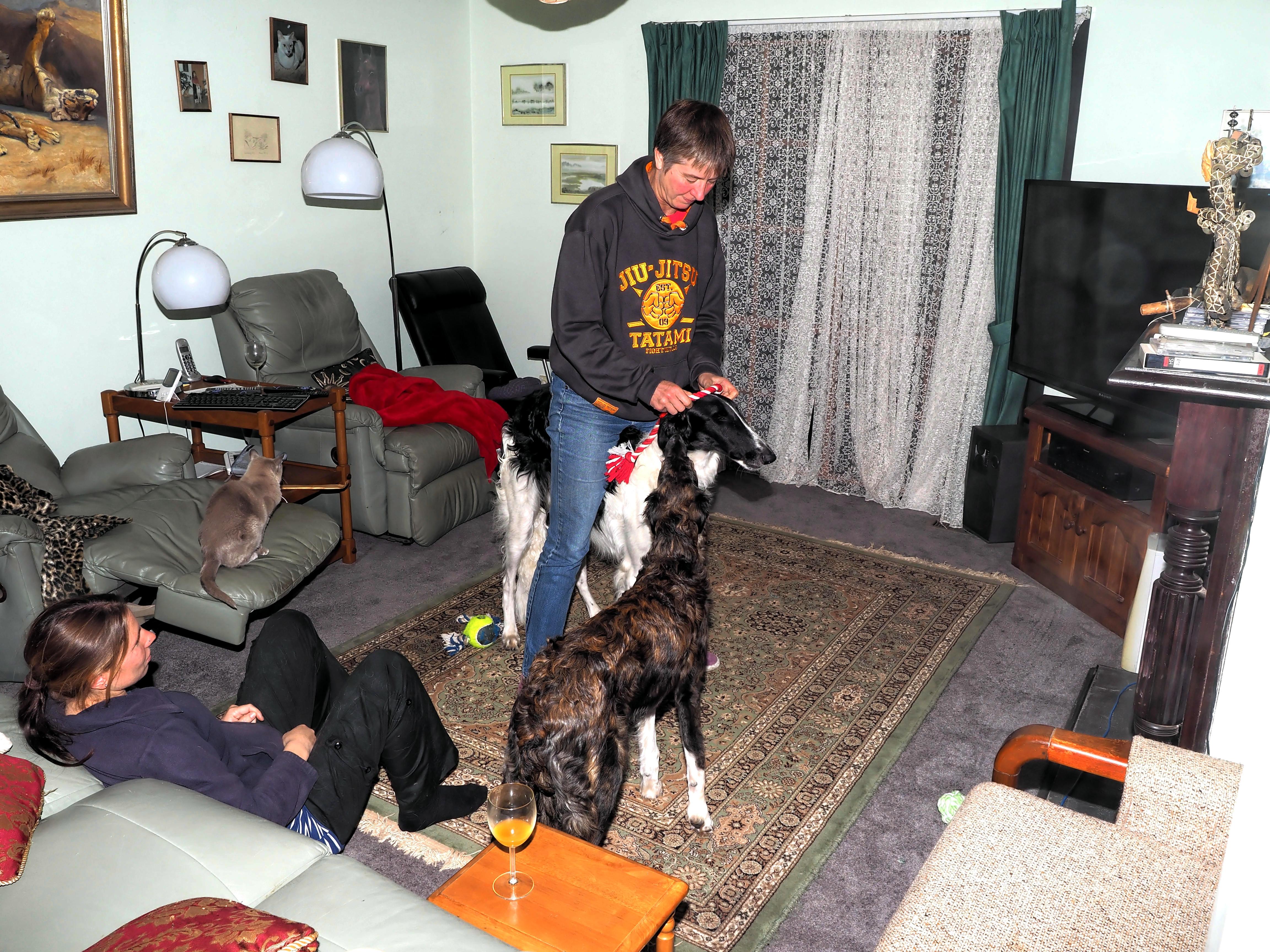 Fun-with-dogs-8.jpeg