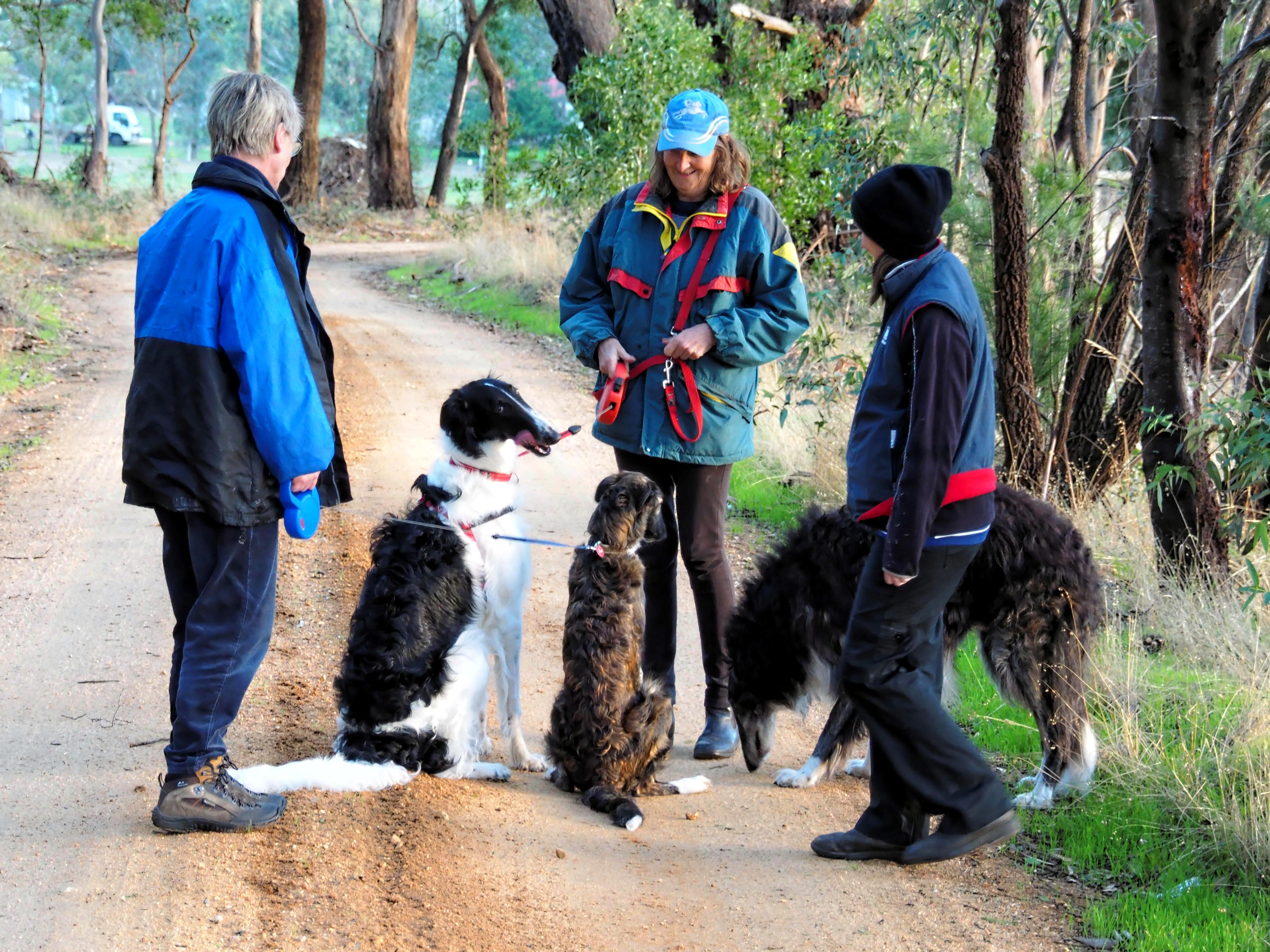 Walking-dogs-14.jpeg