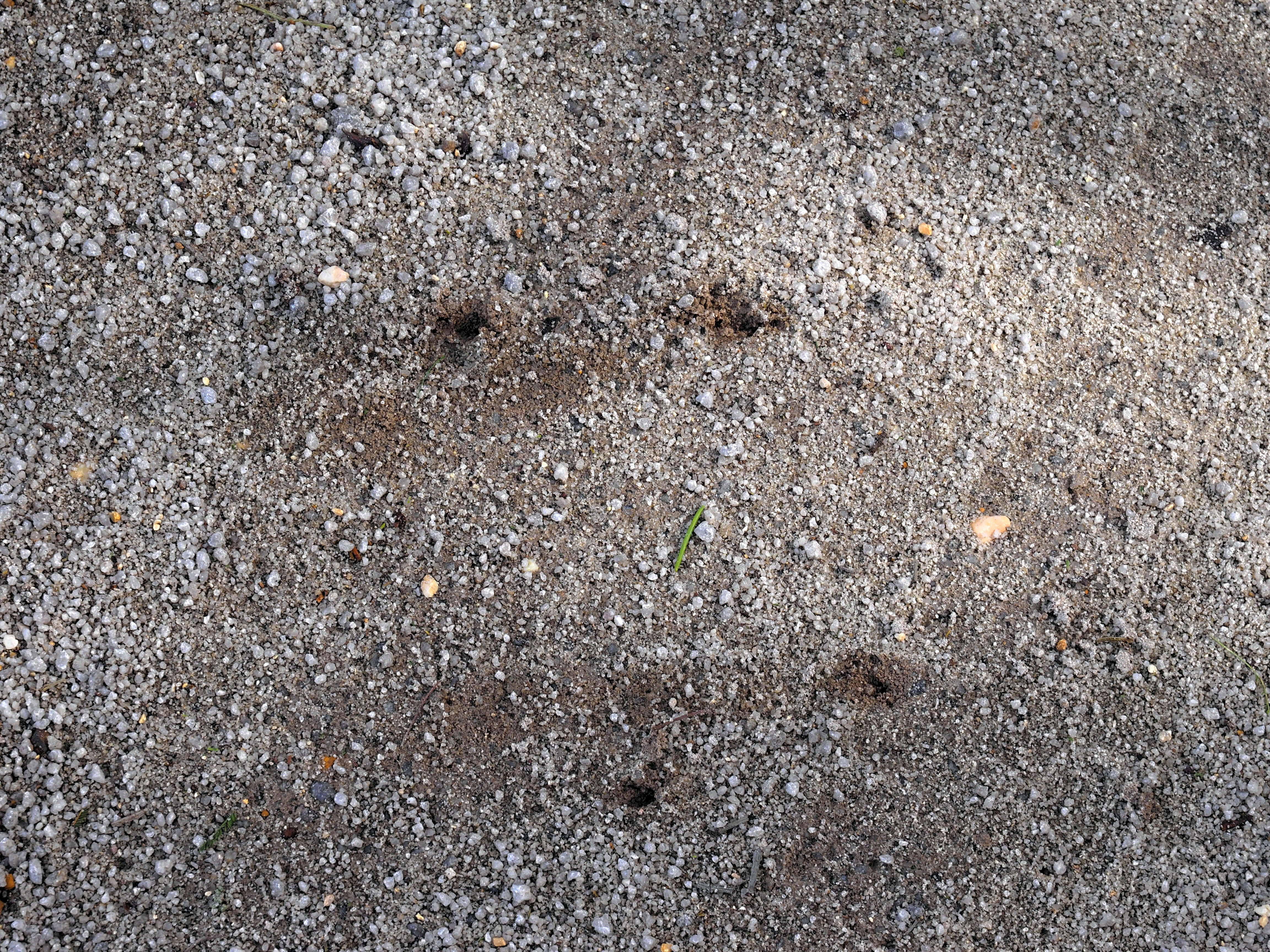 Kangaroo-tracks-3.jpeg