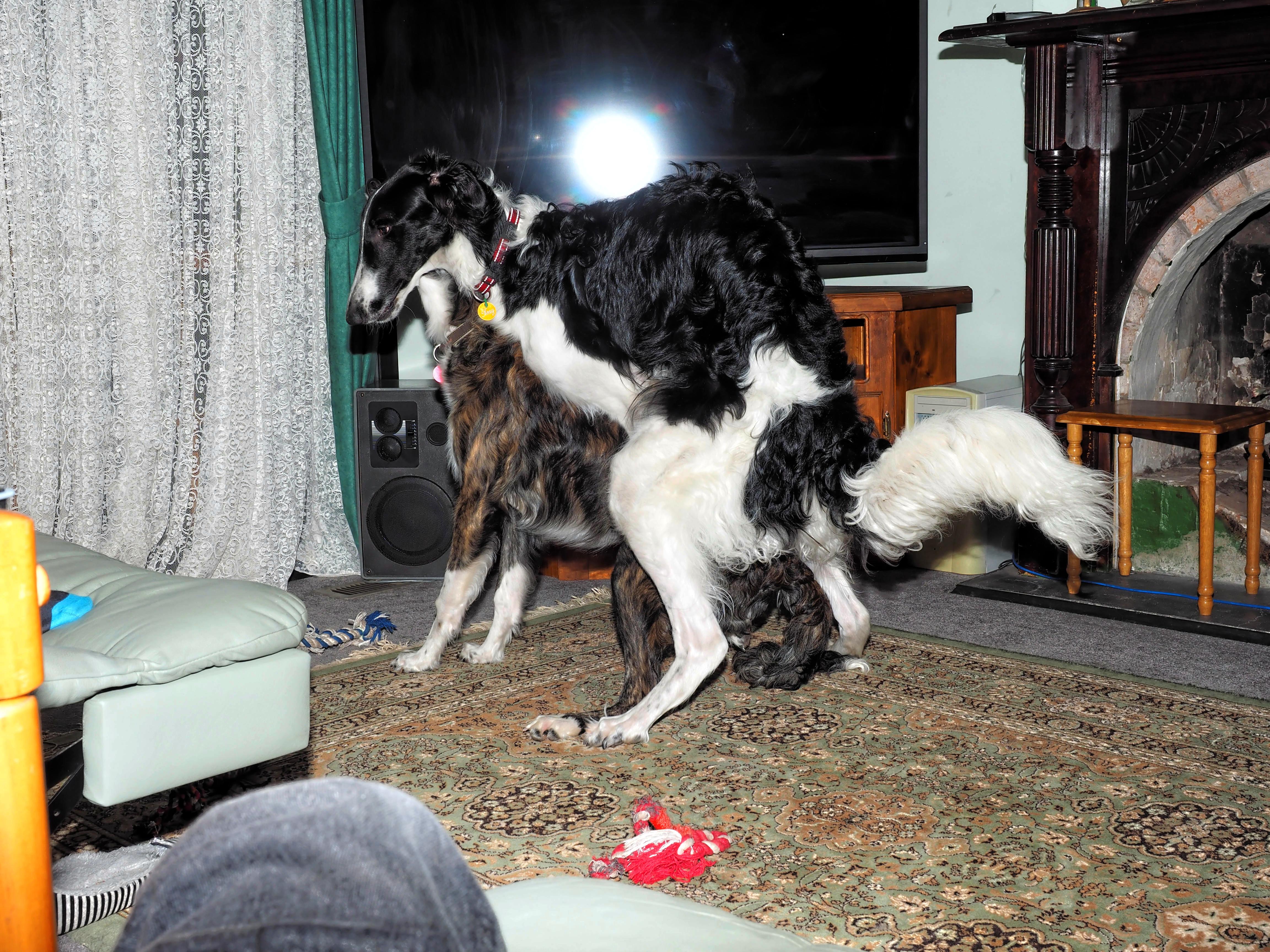 Dogs-32.jpeg