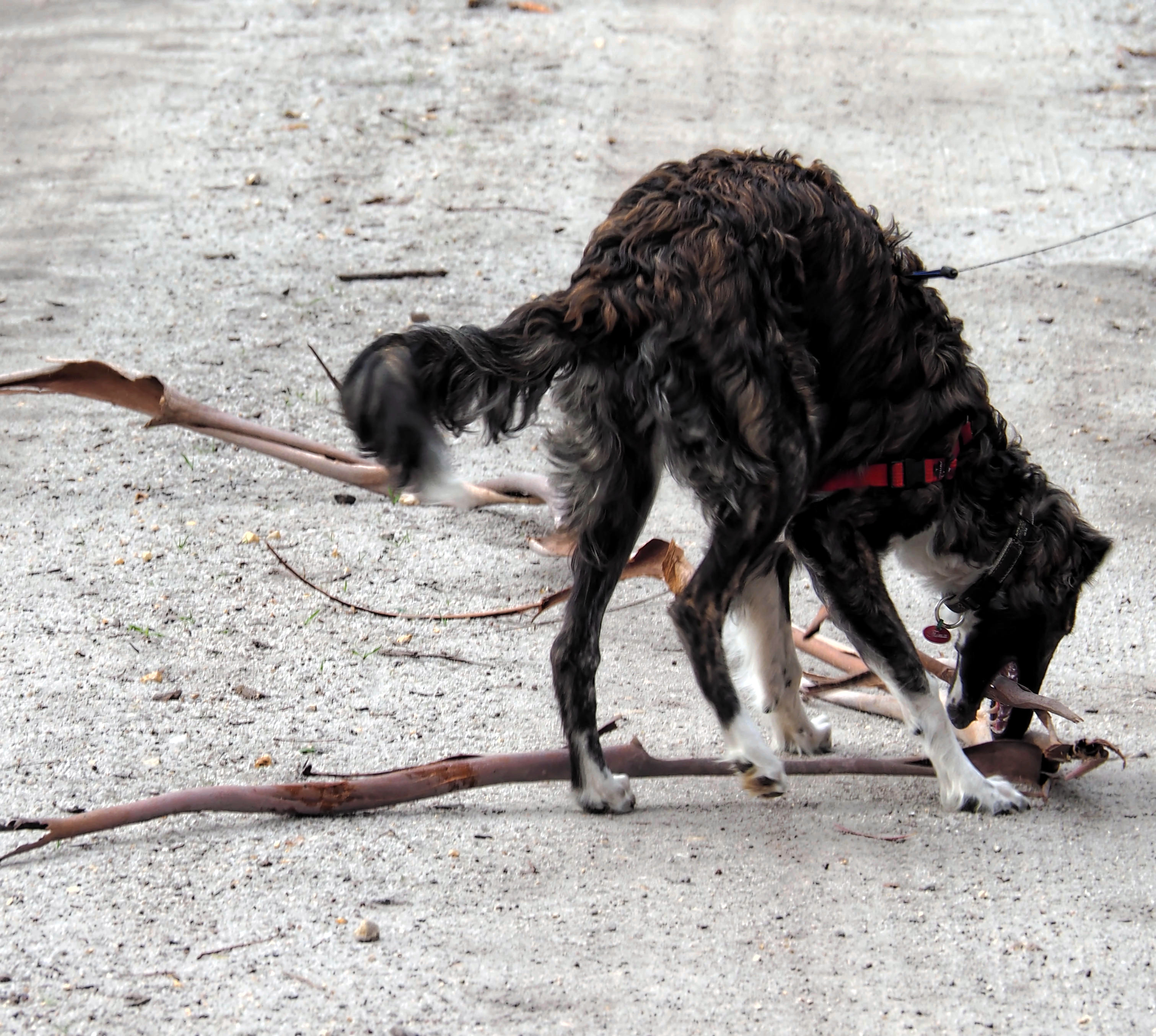 Dogs-4.jpeg