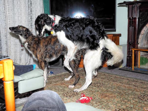 Dogs-30.jpeg