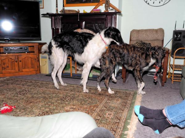 Dogs-35.jpeg