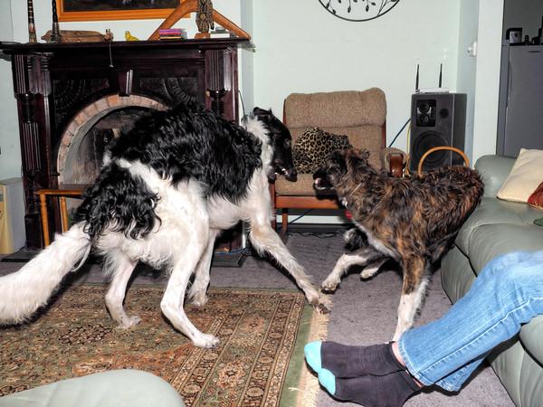 Dogs-46.jpeg