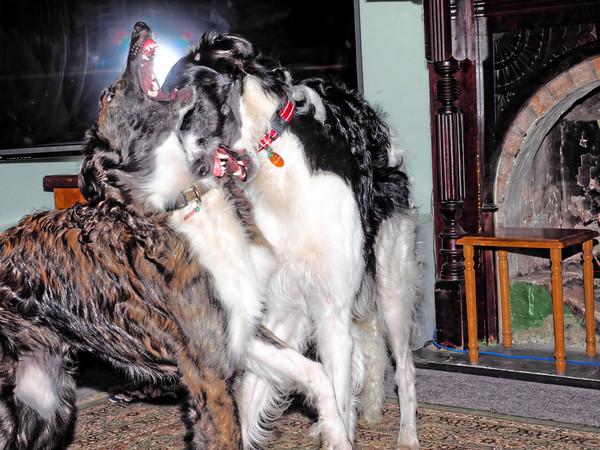 Dogs-51.jpeg