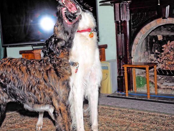 Dogs-54.jpeg