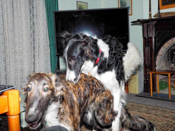 Dogs-57.jpeg