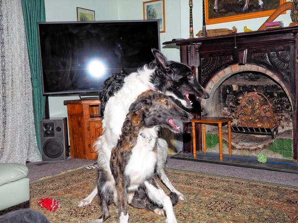 Dogs-58.jpeg