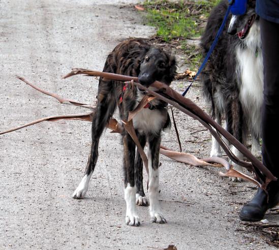 Dogs-7.jpeg