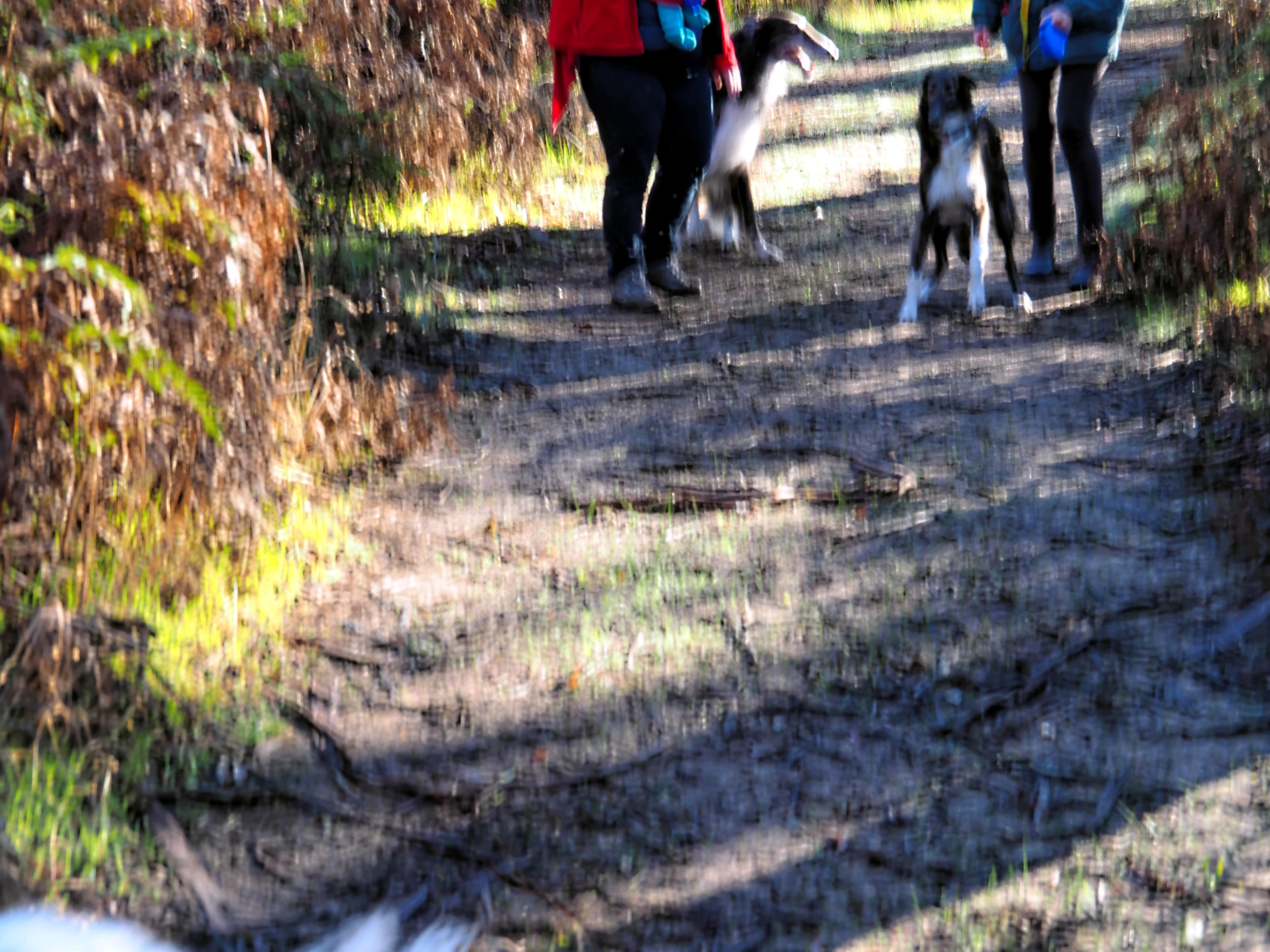 Walking-dogs-13.jpeg