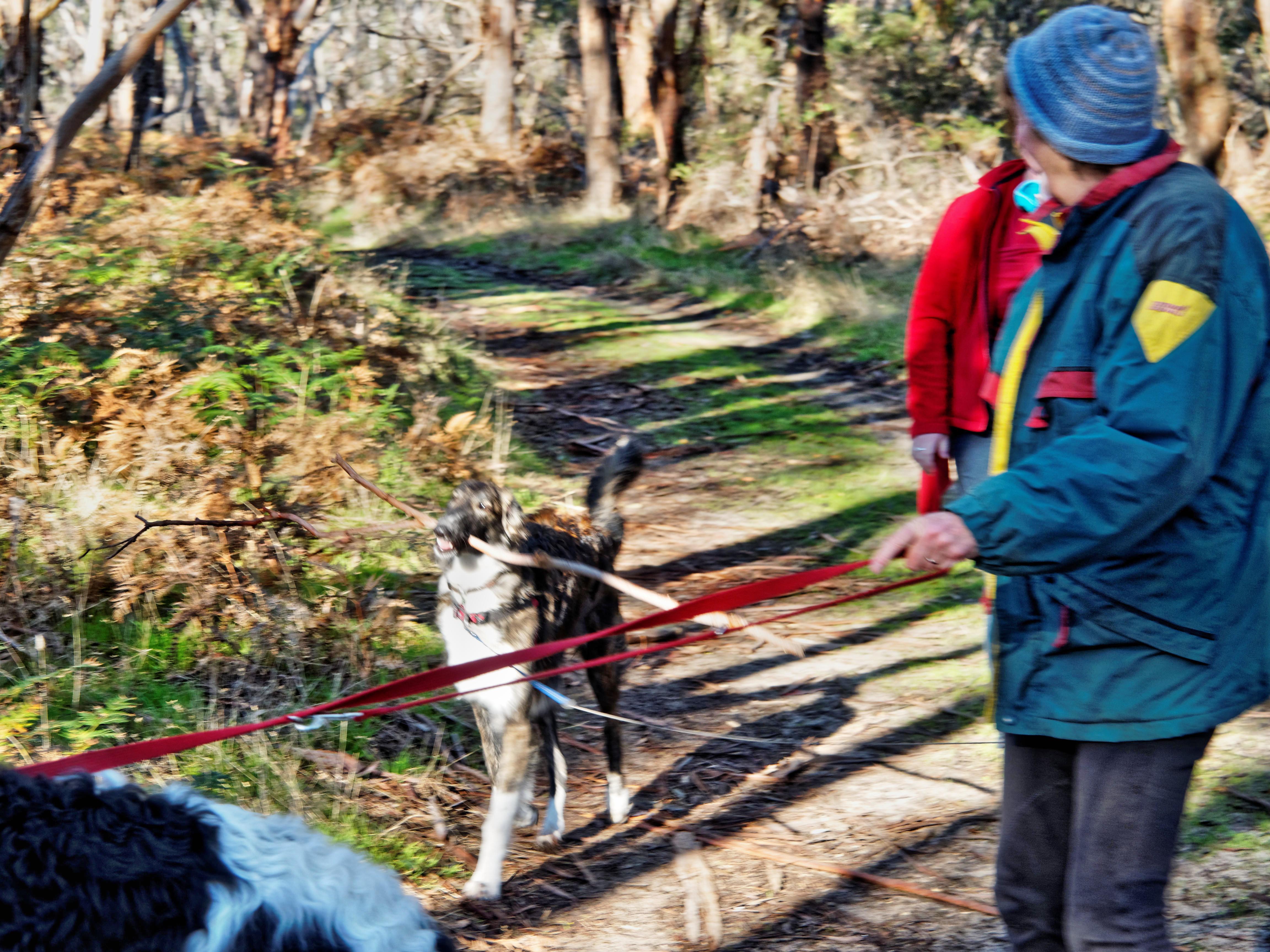 Walking-dogs-28.jpeg