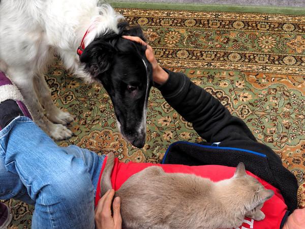 Chris-and-dogs-8.jpeg