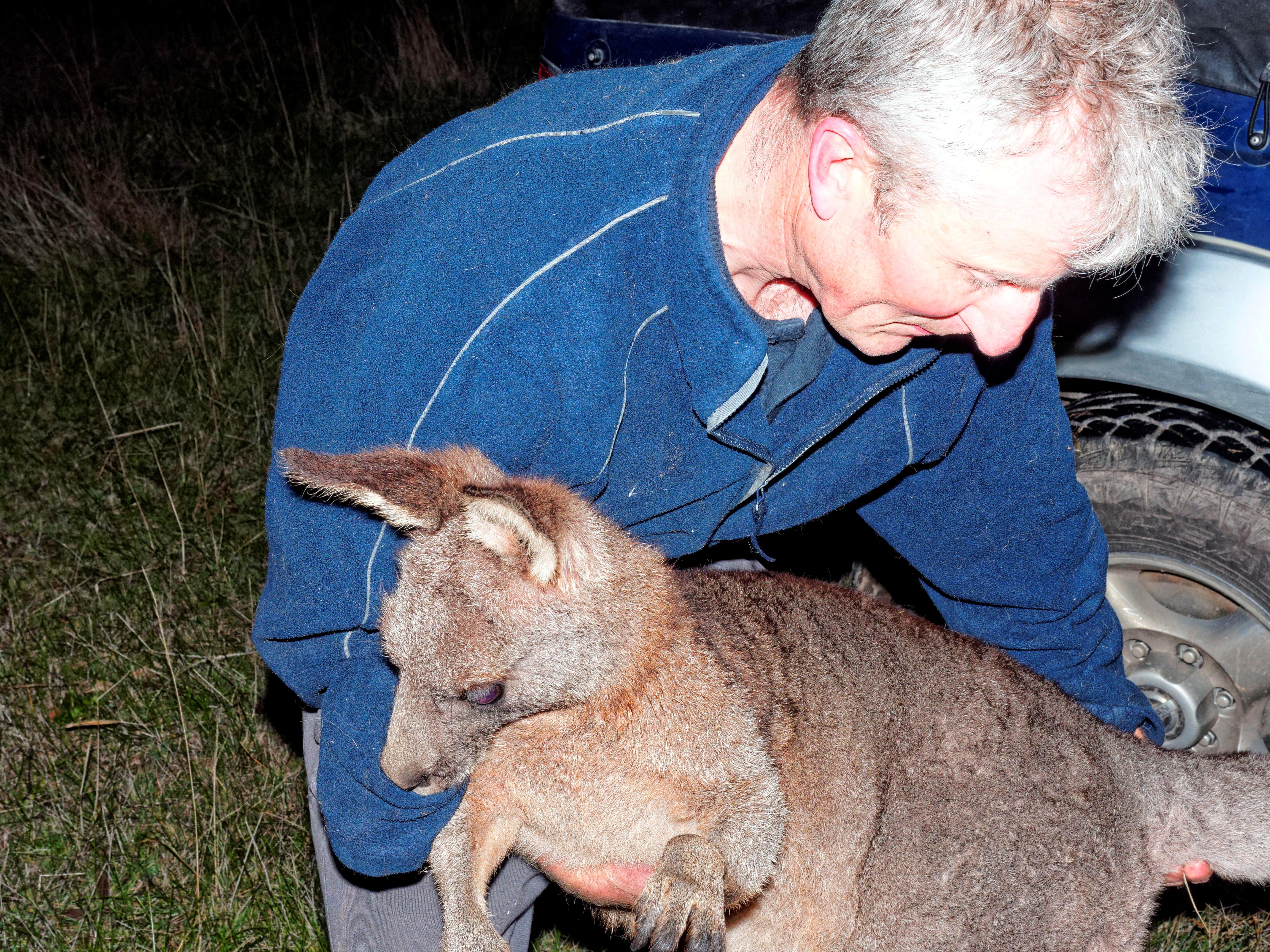 Trapped-kangaroo-42.jpeg