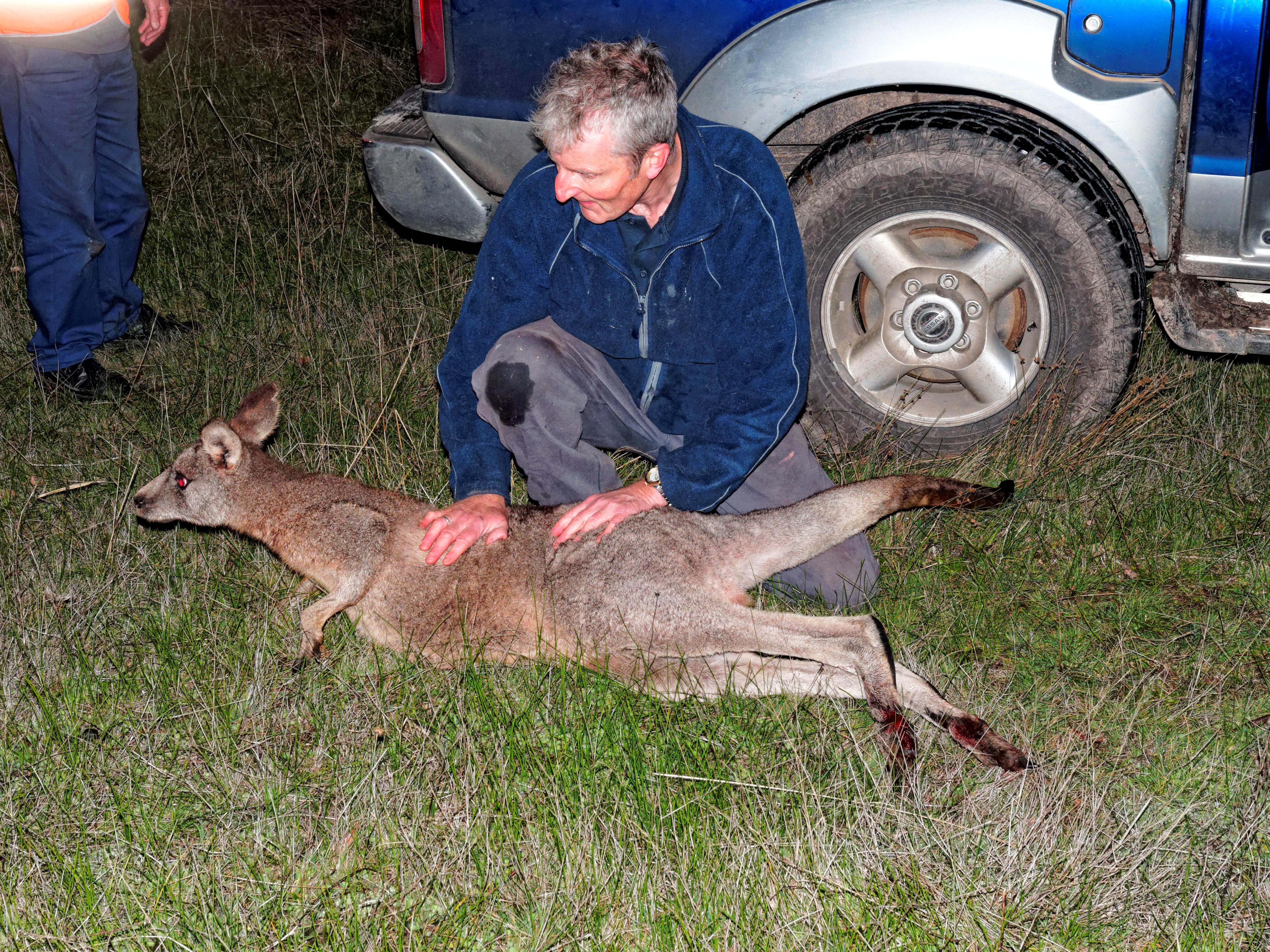 Trapped-kangaroo-49.jpeg