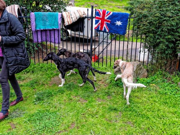 Dogs-11.jpeg