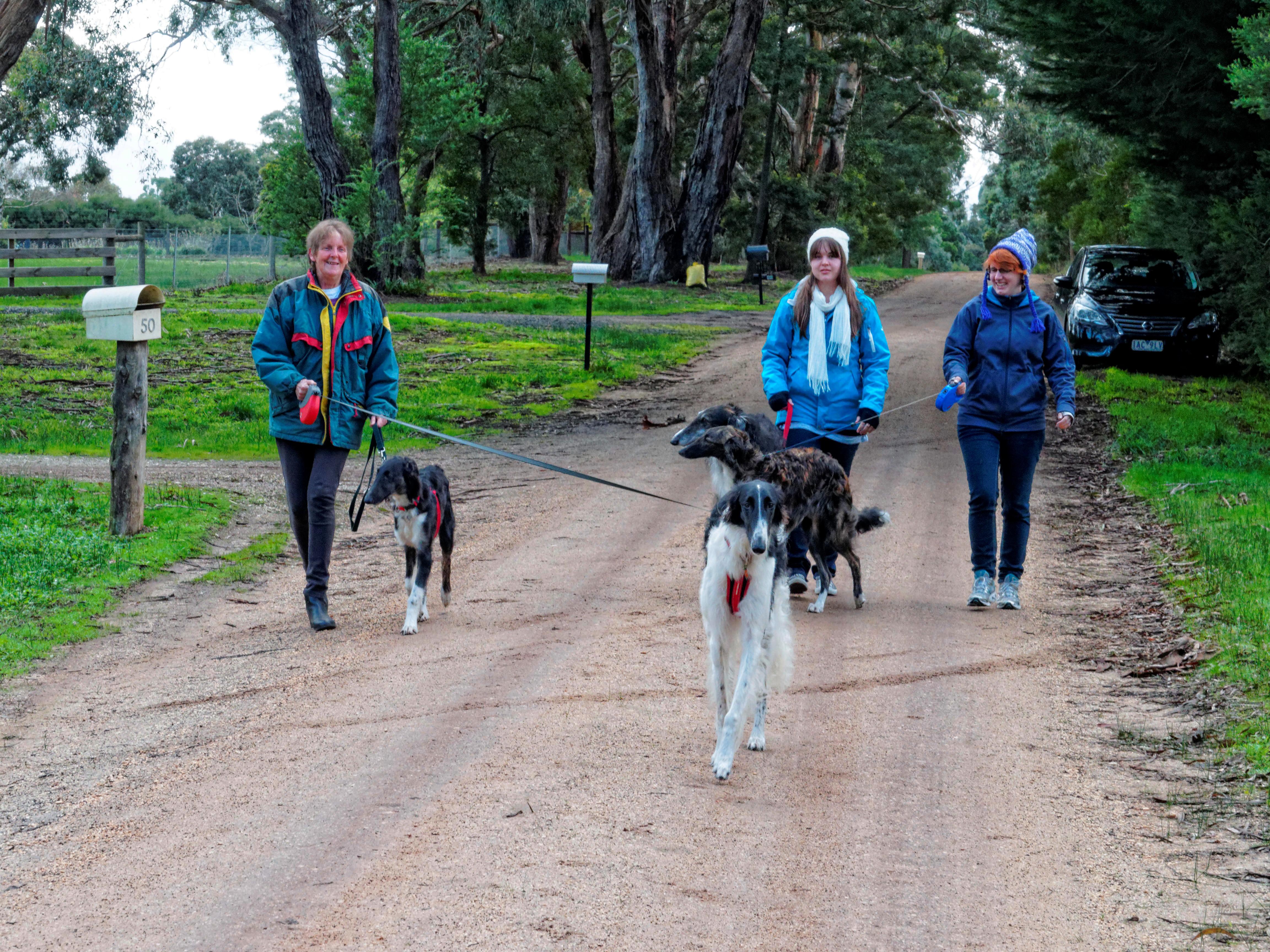 Walking-dogs-6.jpeg