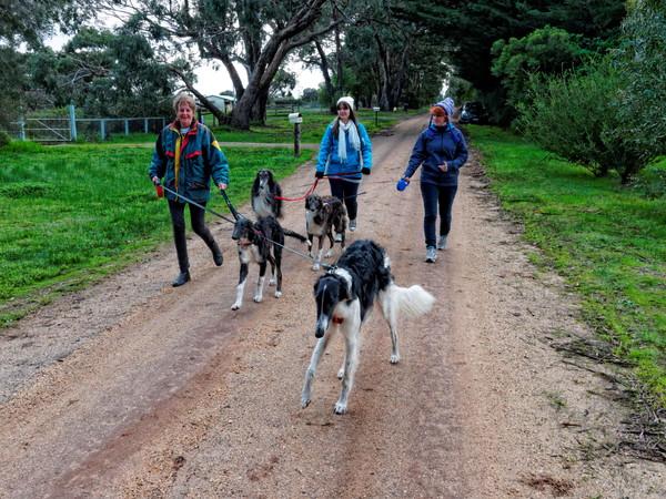 Walking-dogs-12.jpeg