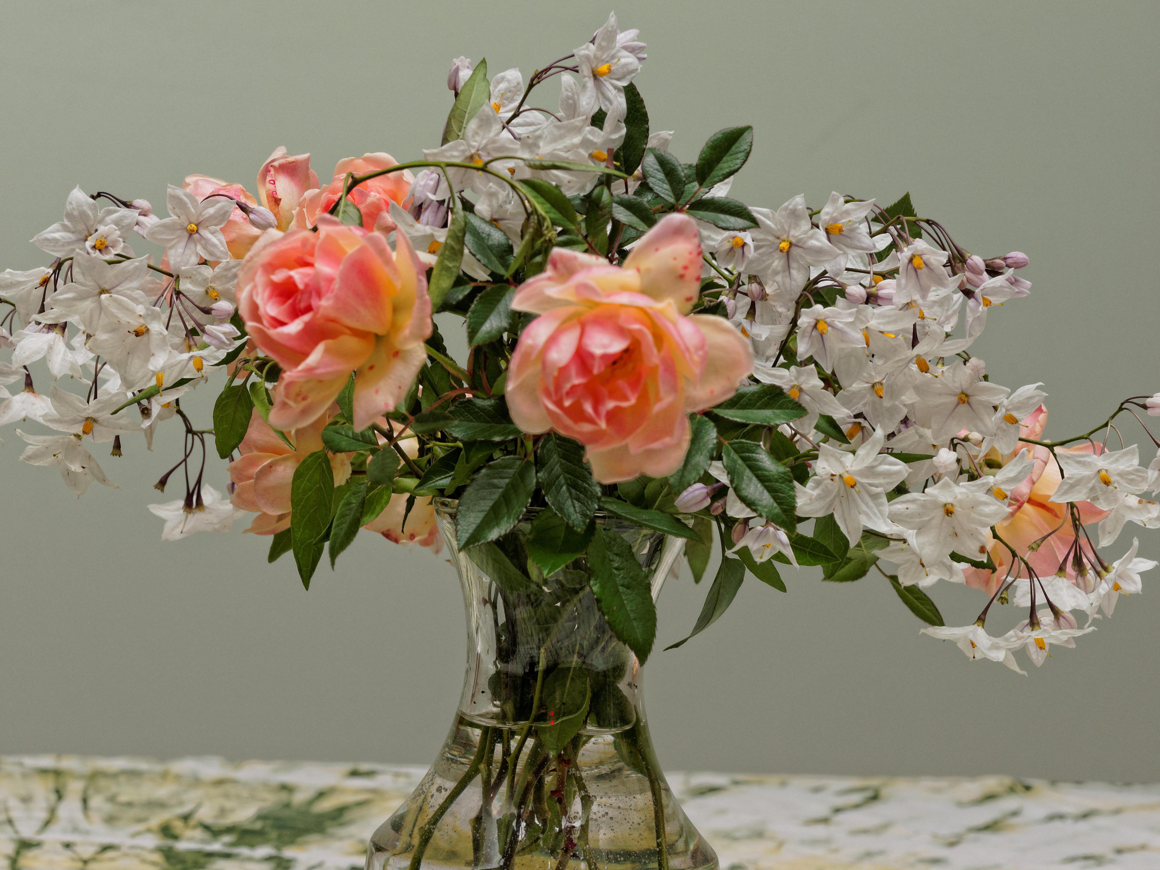 Roses-12.jpeg
