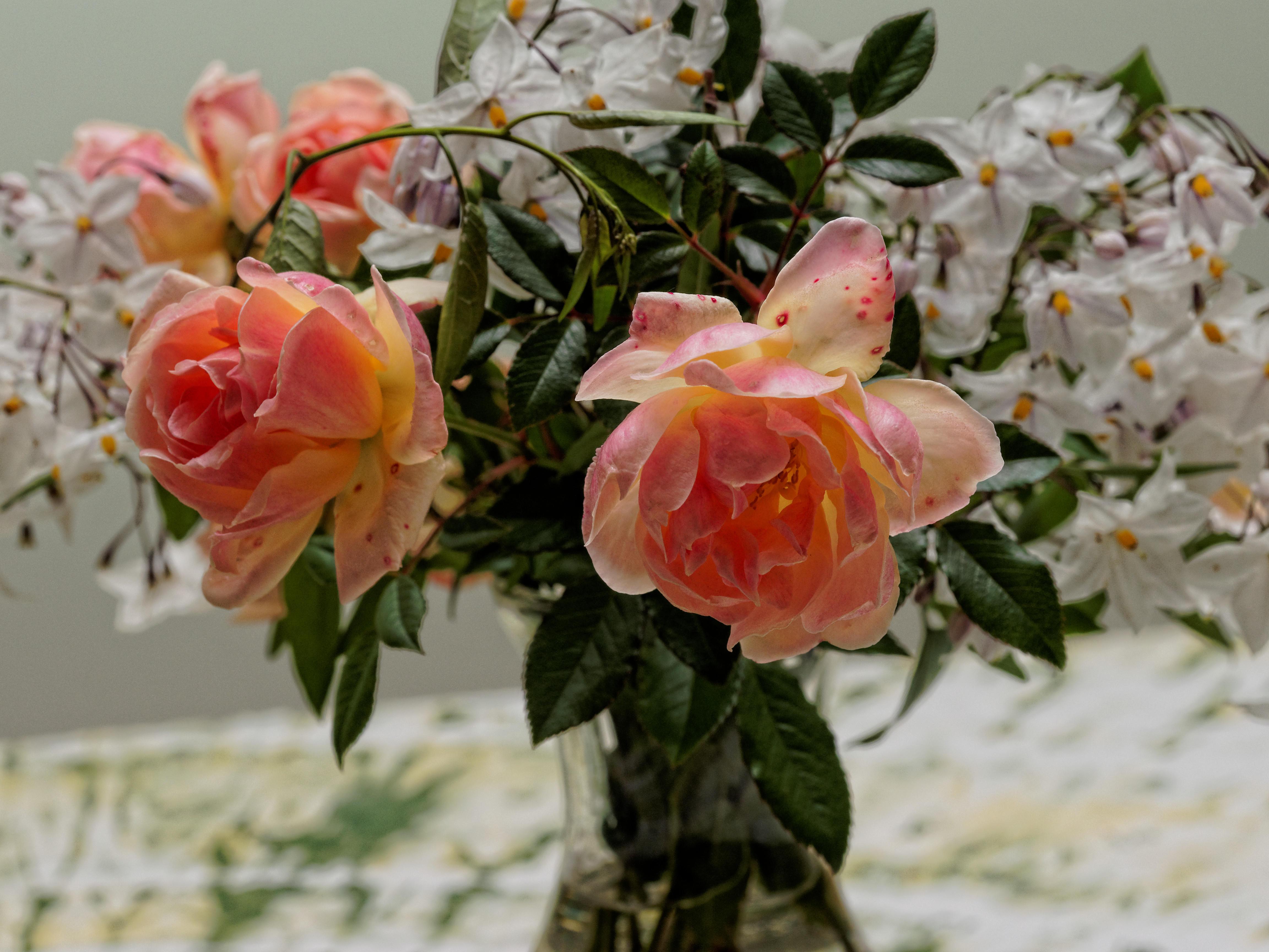 Roses-2.jpeg
