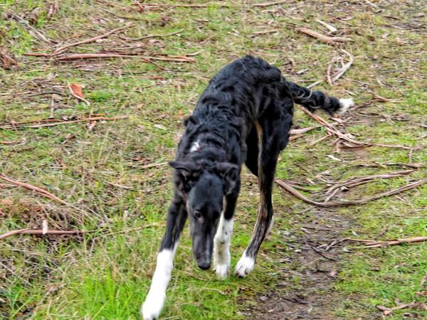 Walking-dogs-1.jpeg