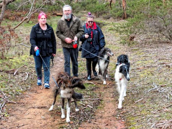 Walking-dogs-21.jpeg