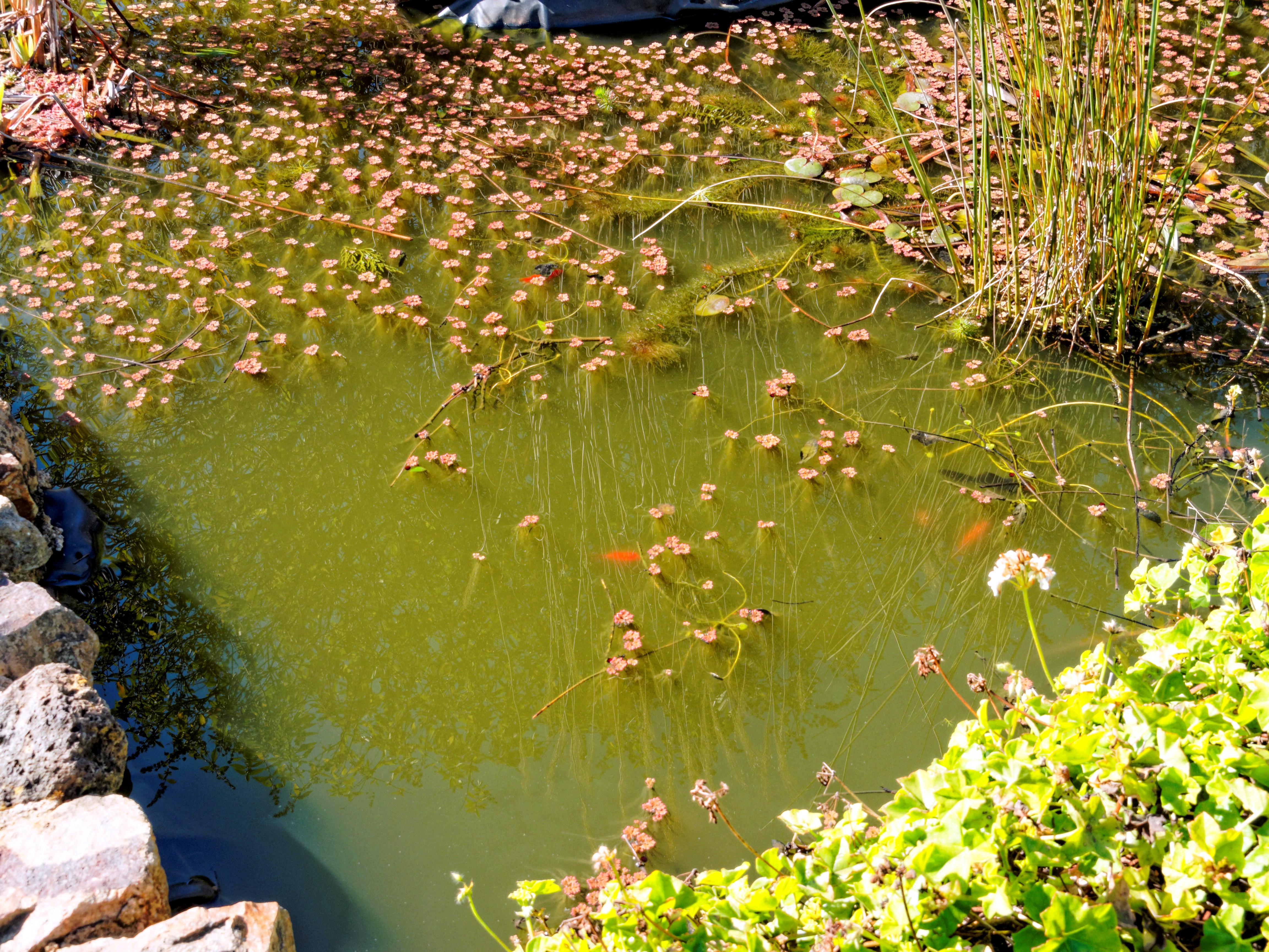 Pond.jpeg