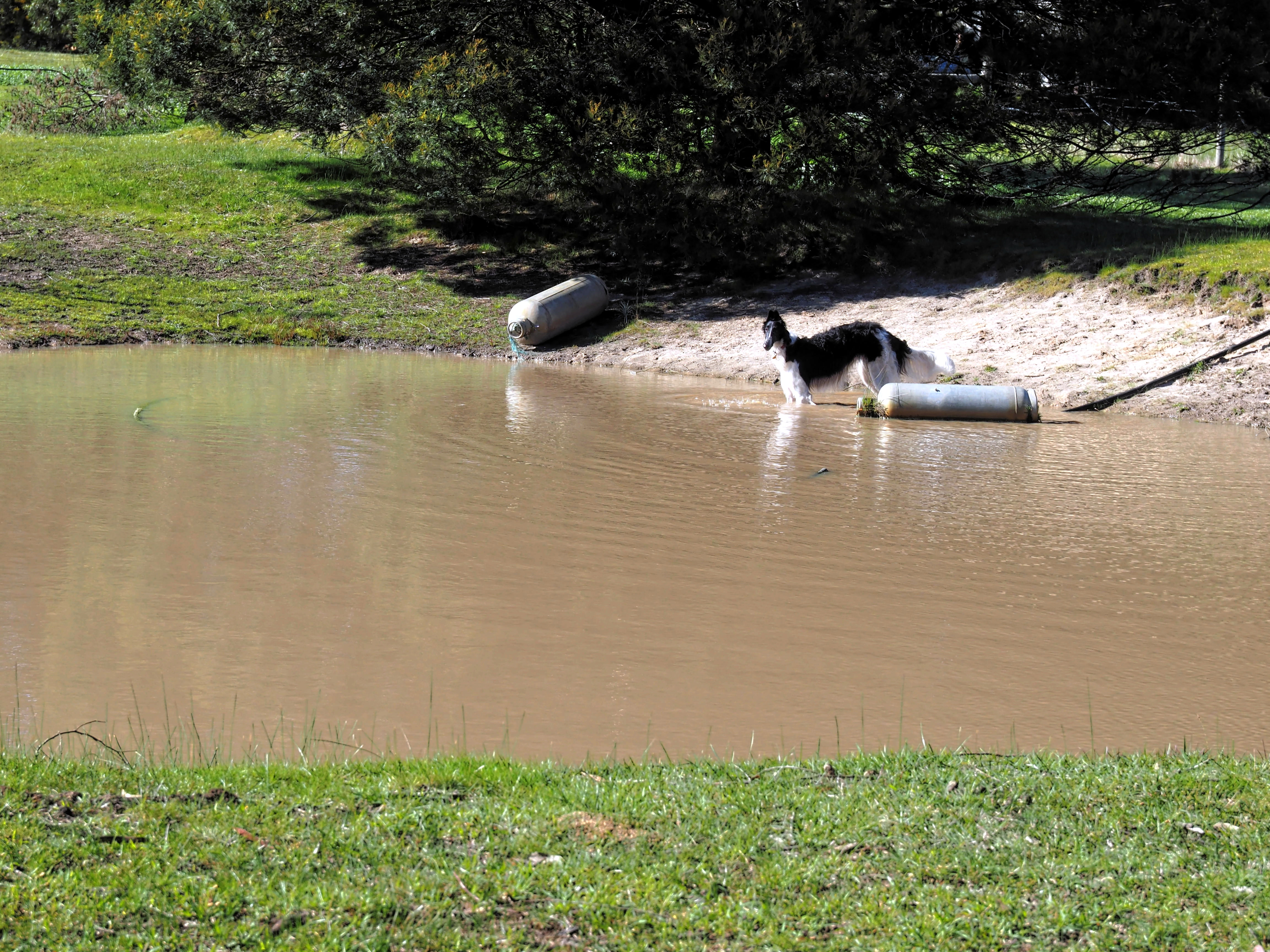 Dogs-in-pond-1.jpeg