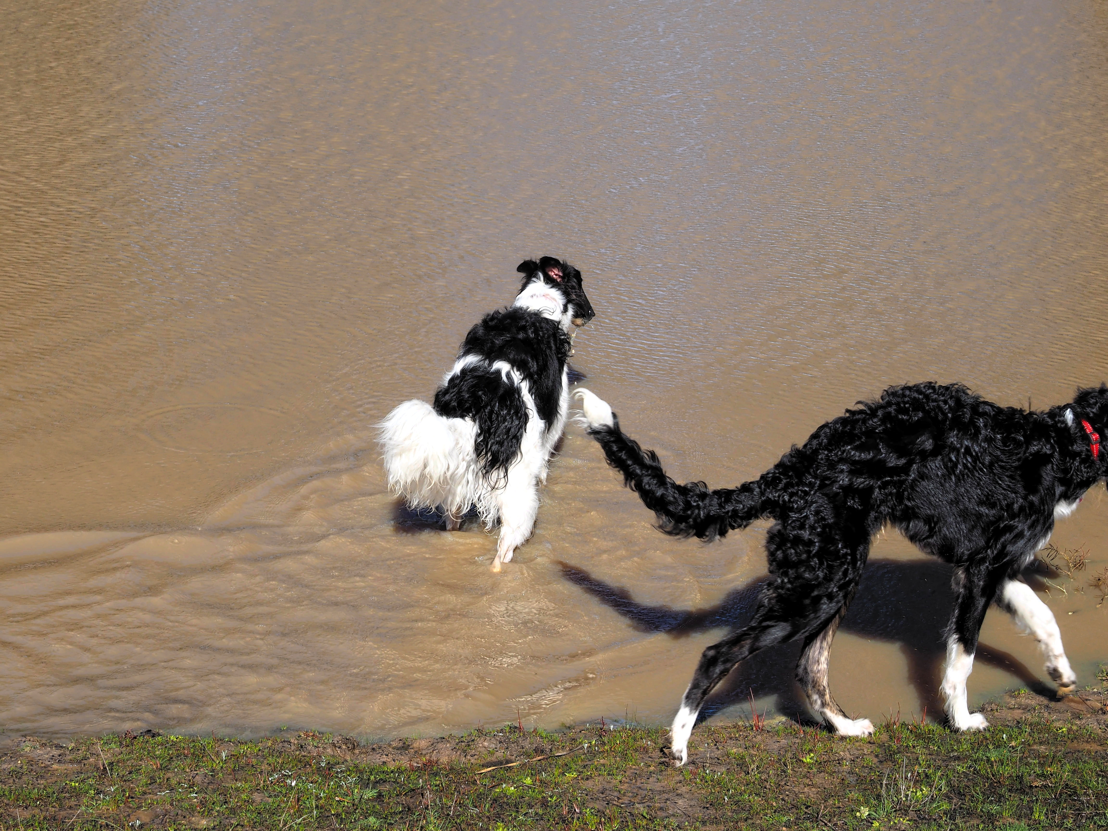Dogs-in-pond-4.jpeg