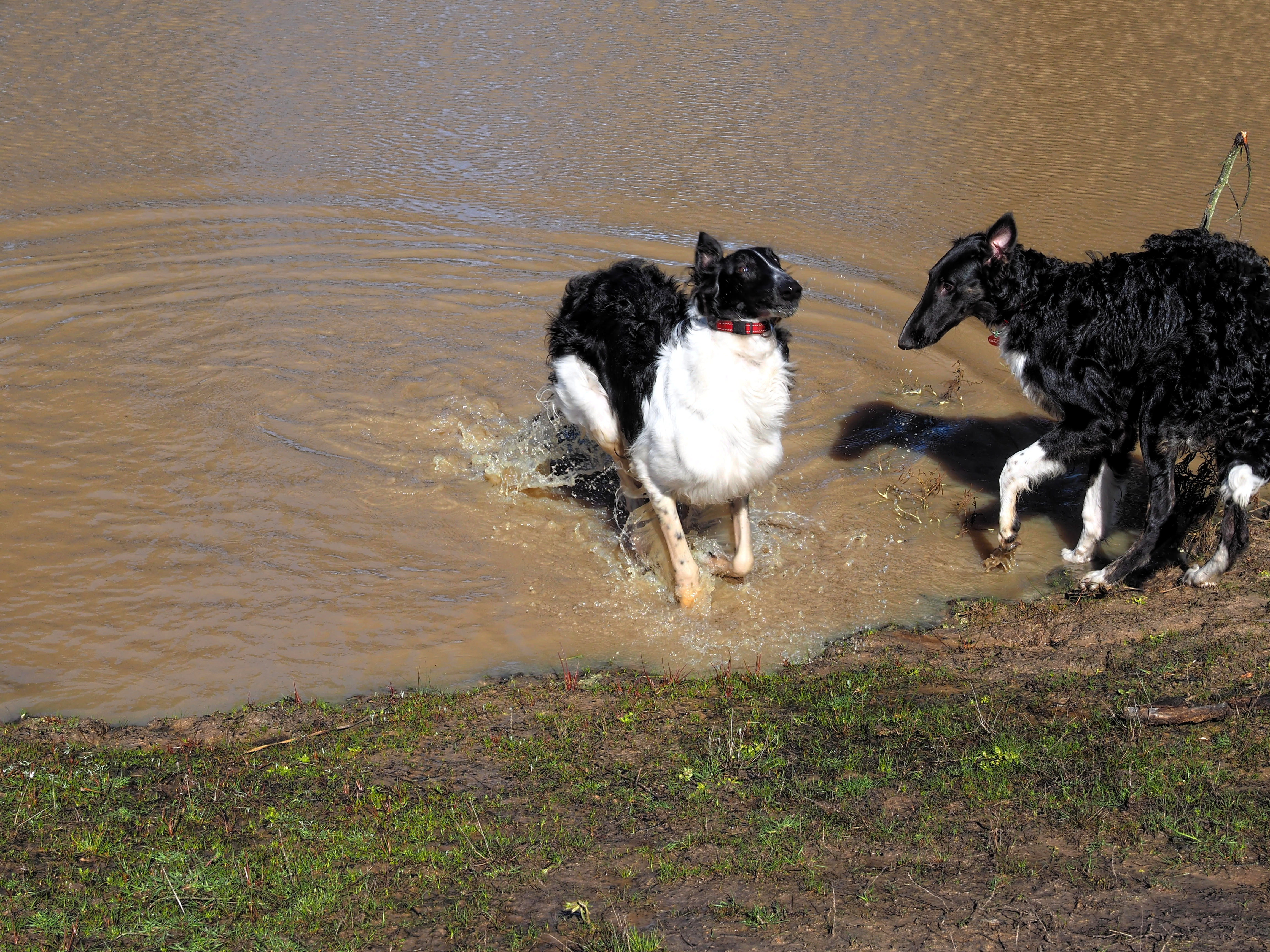 Dogs-in-pond-5.jpeg