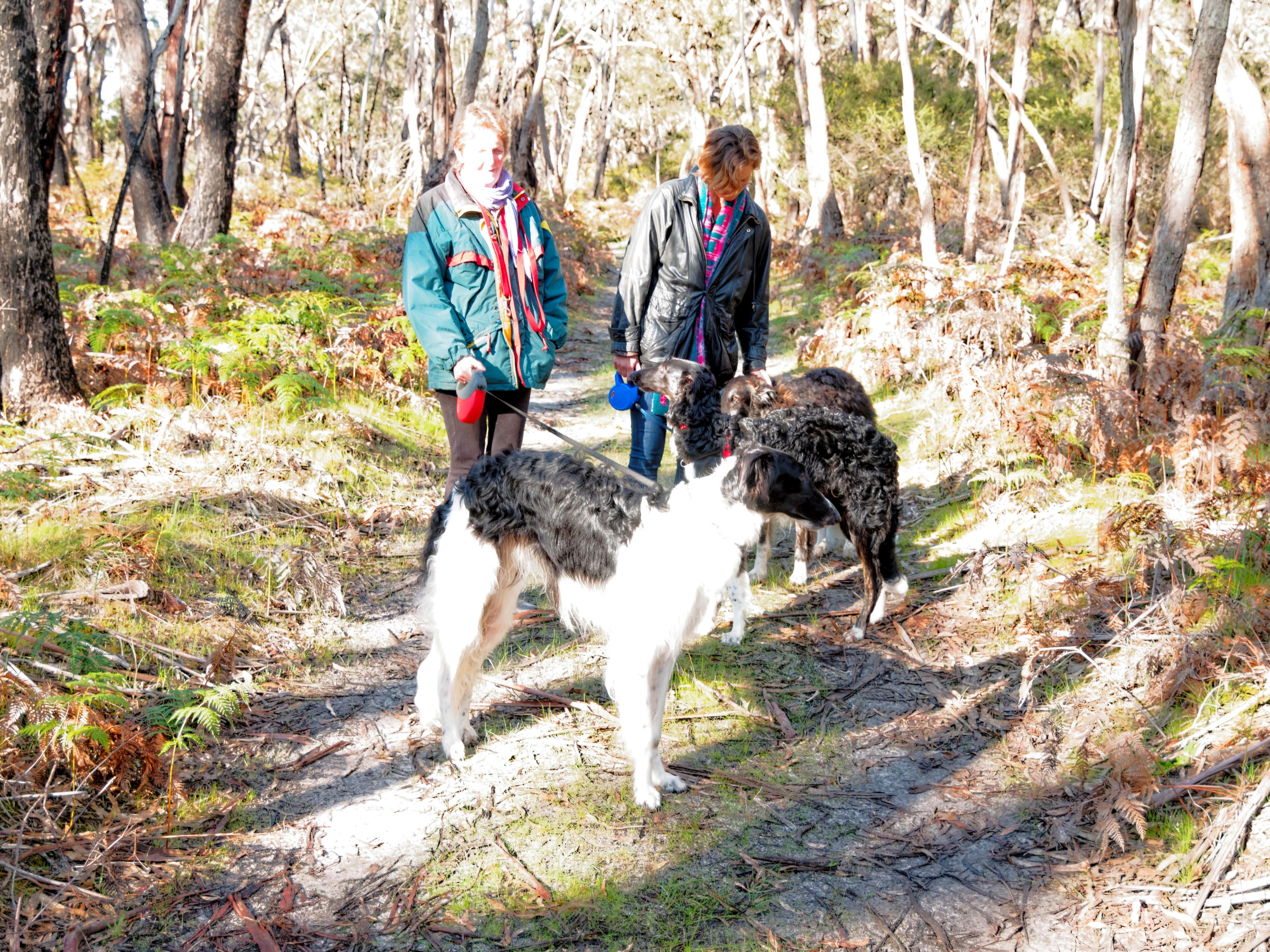 Walk-in-forest-12.jpeg